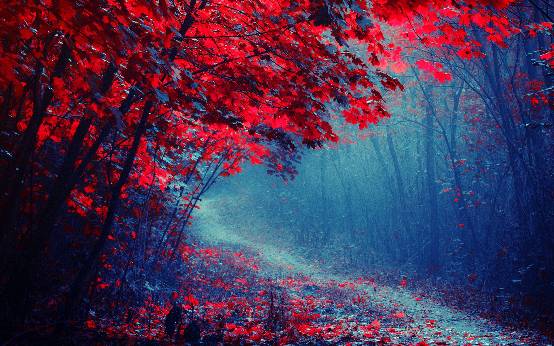 Wallpaper Red leaves forest, road, trees, autumn, mist ...