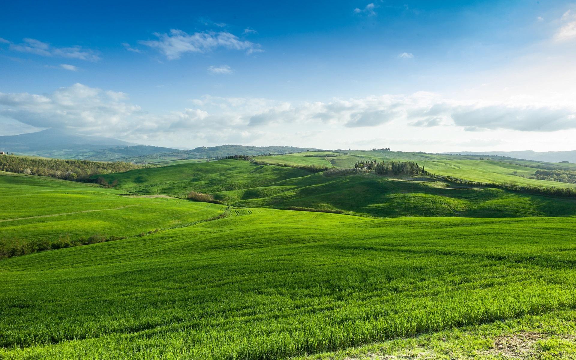 зеленый лес зеленое поле картинки кабине