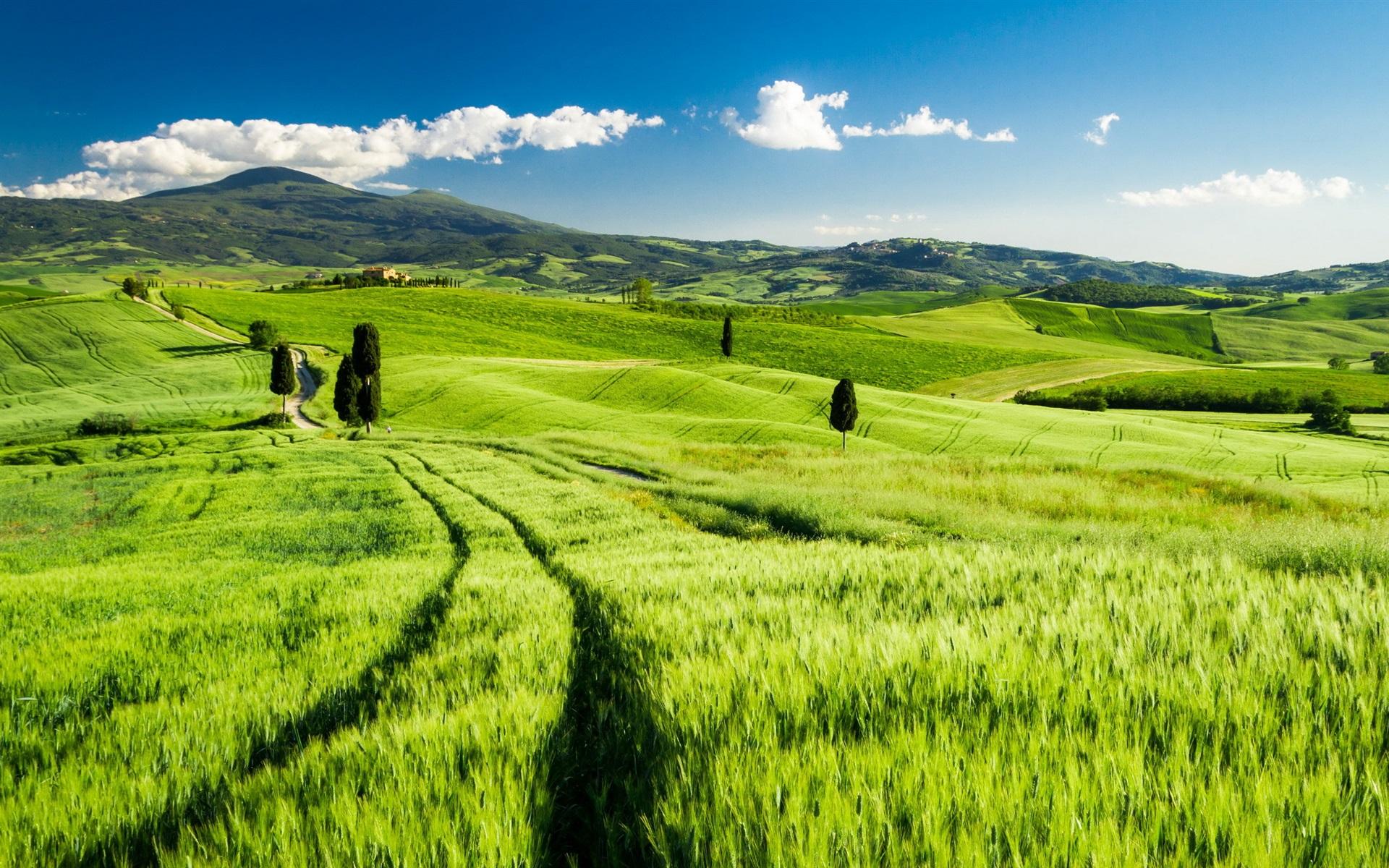 песчаных зеленый лес зеленое поле картинки доходом больше