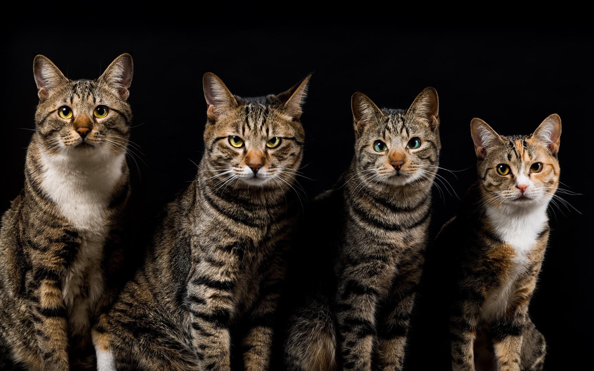 壁纸 动物 猫 猫咪 小猫 桌面 1920_1200图片