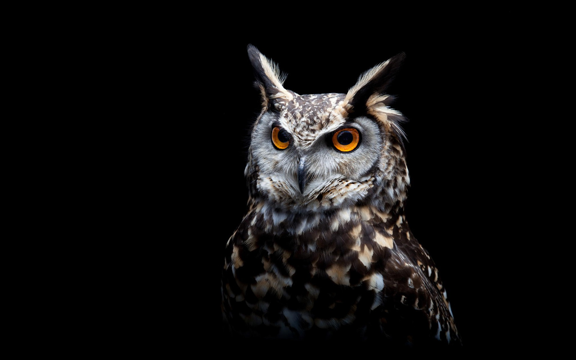 wallpaper owl, black background 1920x1200 hd picture, image