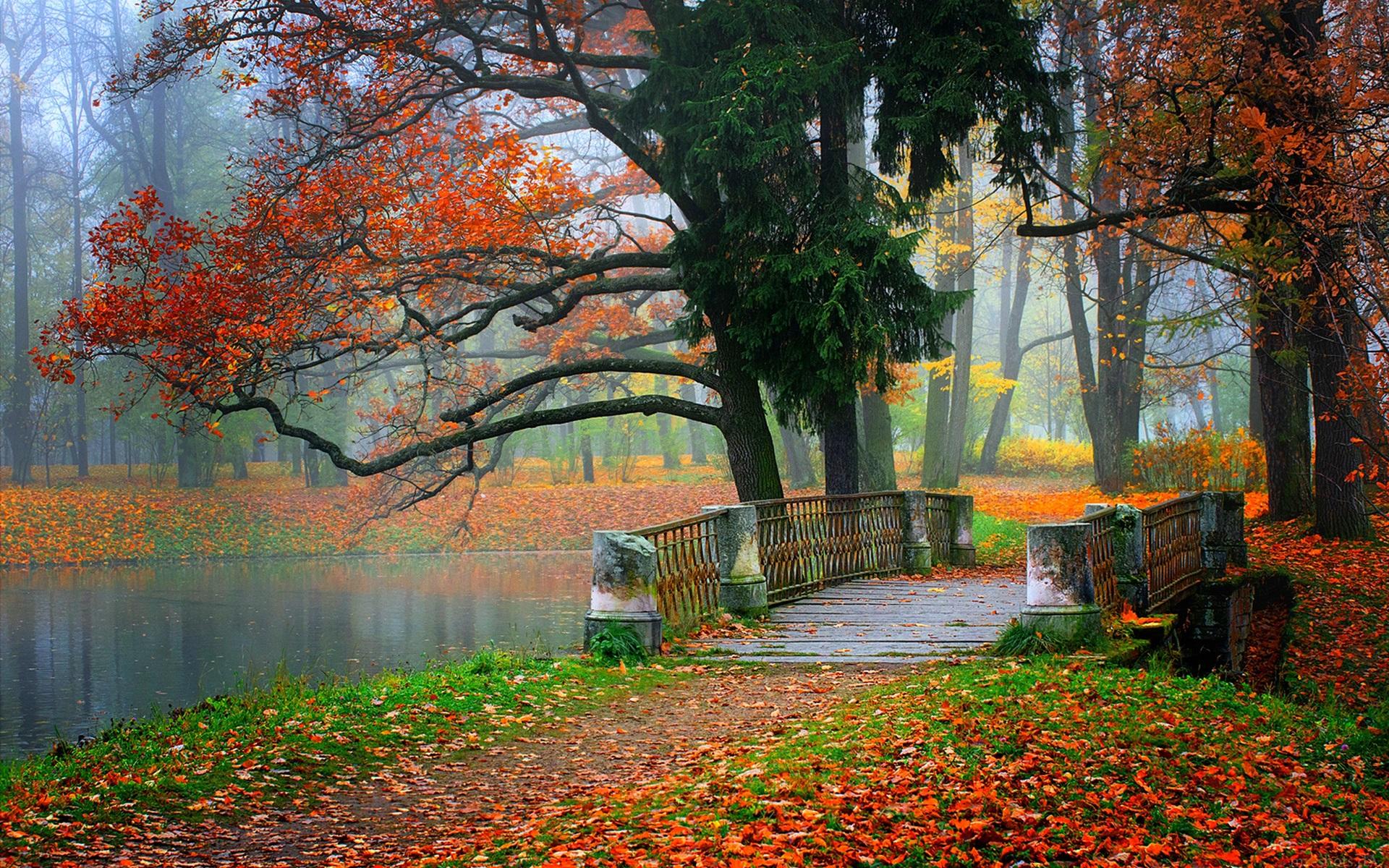 foto de Fonds d'écran Parc paysage, rivière, l'eau, la forêt, les arbres ...