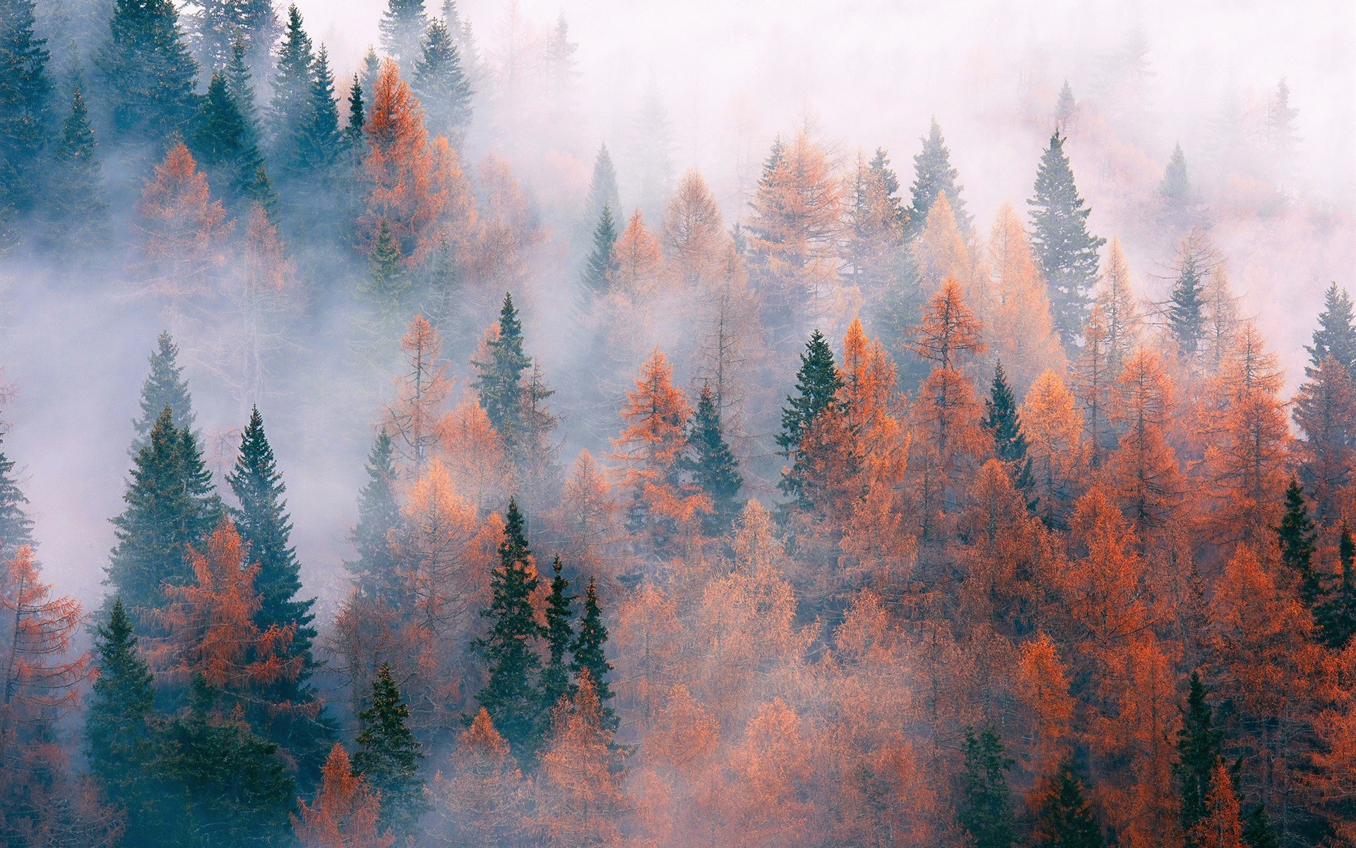 Wallpaper Forest Trees Fog Autumn 1920x1200 Hd Picture Image