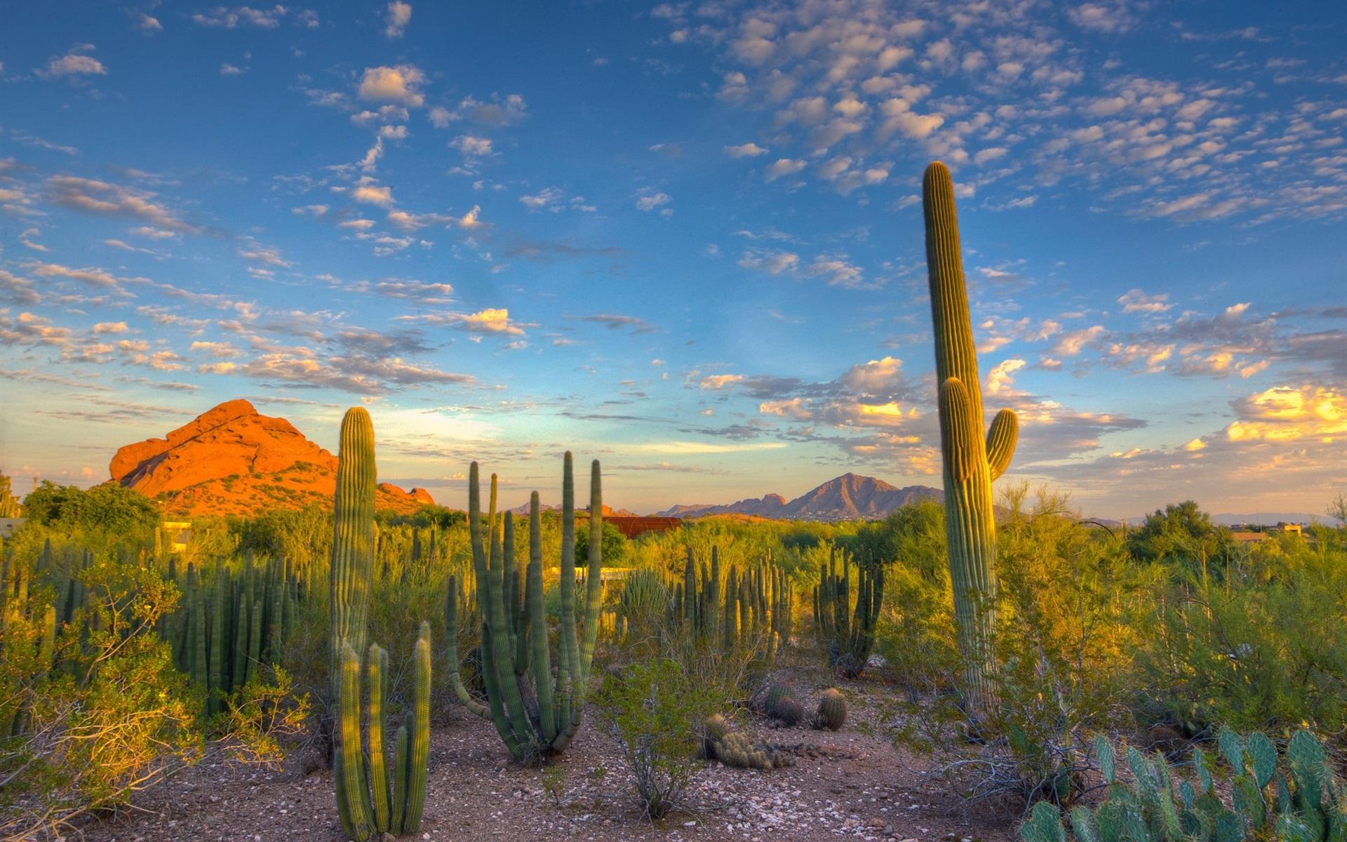 Arizona desert cactus pictures
