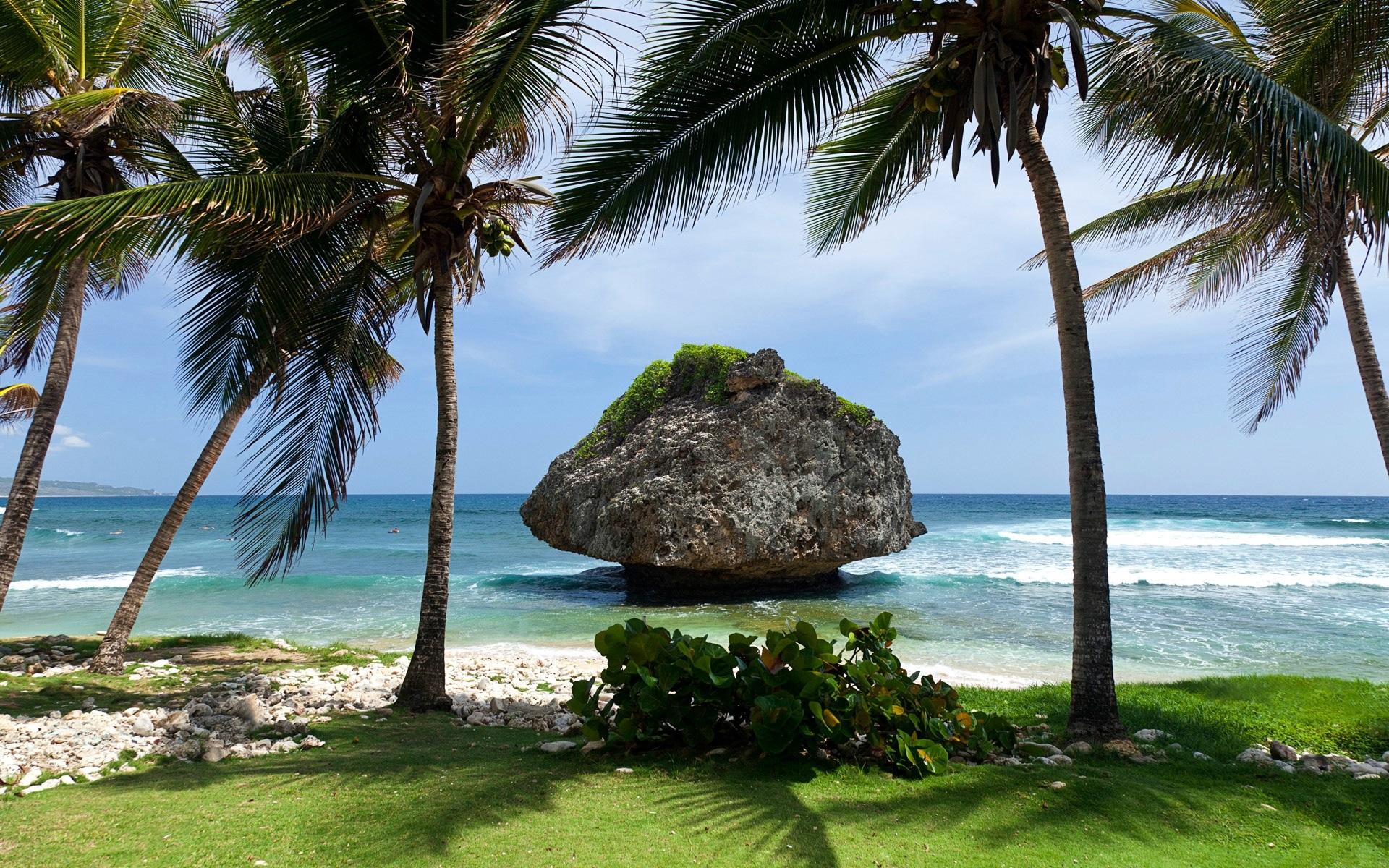 берег камни пальмы shore stones palm trees  № 792072 загрузить