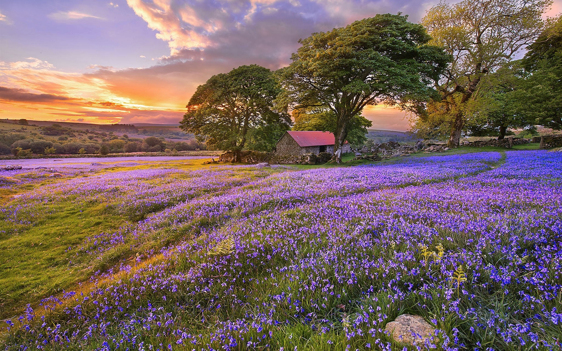 Wallpaper blue flowers trees house sunset 1920x1200 hd picture image download this wallpaper izmirmasajfo
