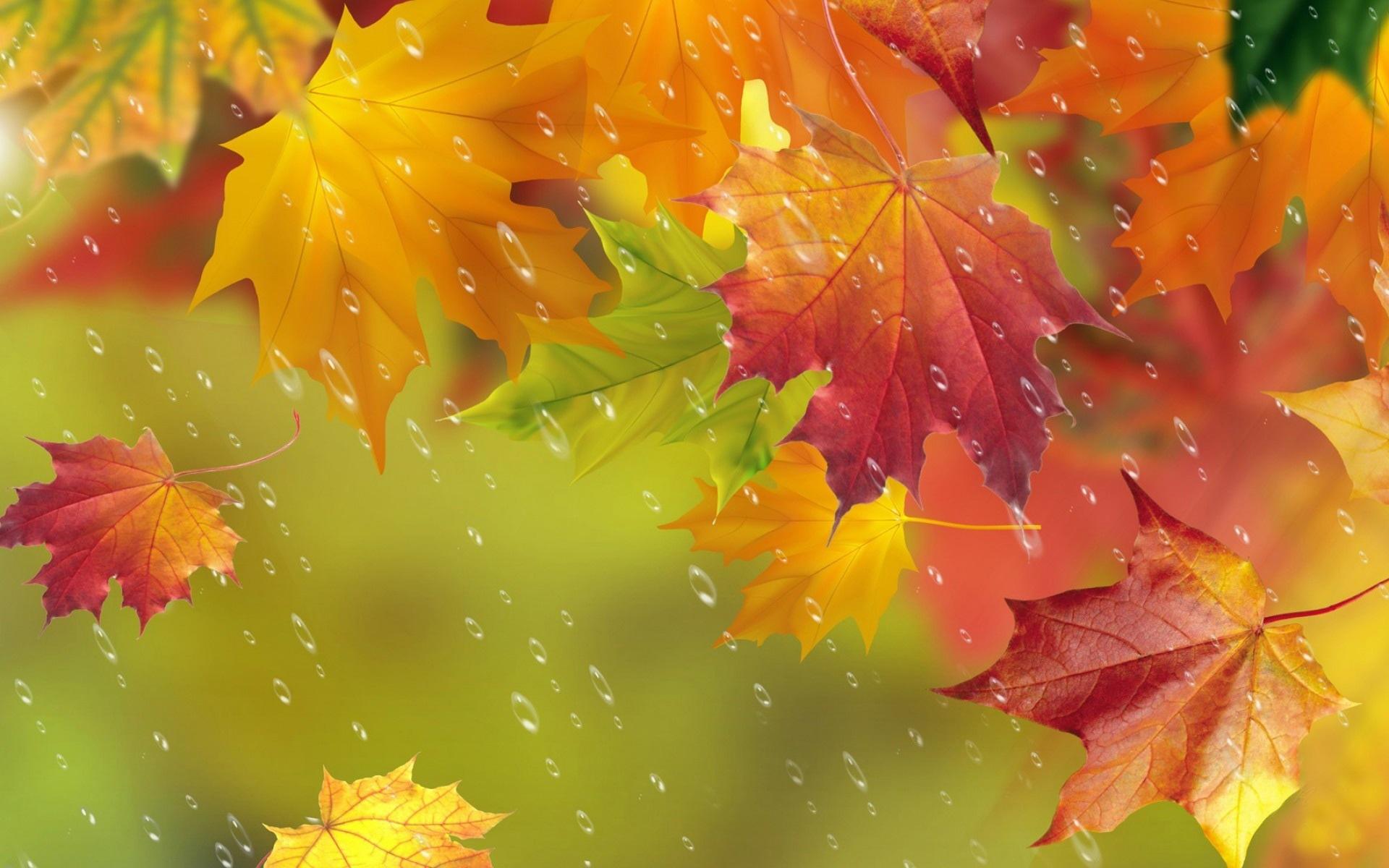 Листья осенние заставка