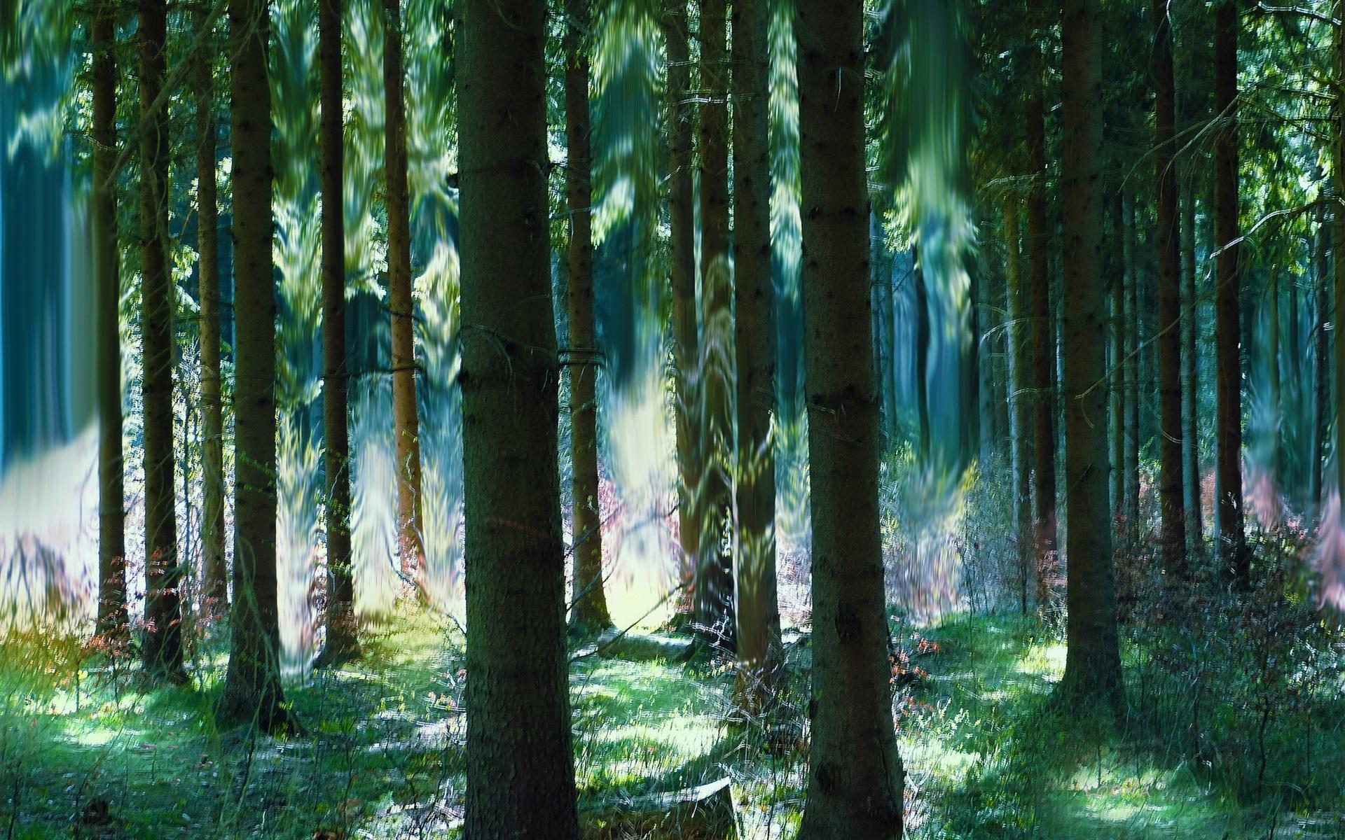 森林,树木,夏天,艺术魅力 壁纸图片