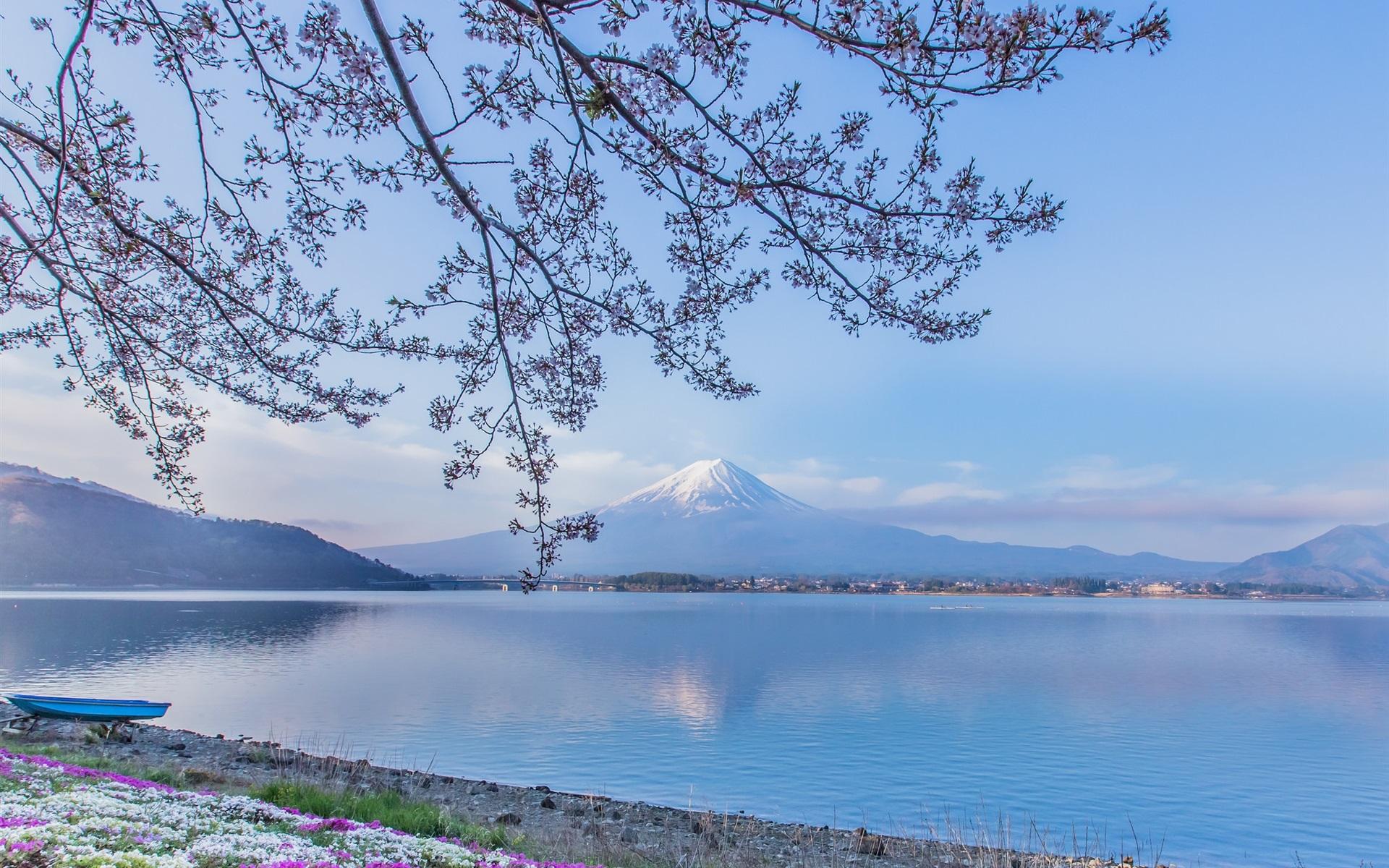 富士山、河口湖、日本、小枝、花 壁紙 | 1920x1200 ...