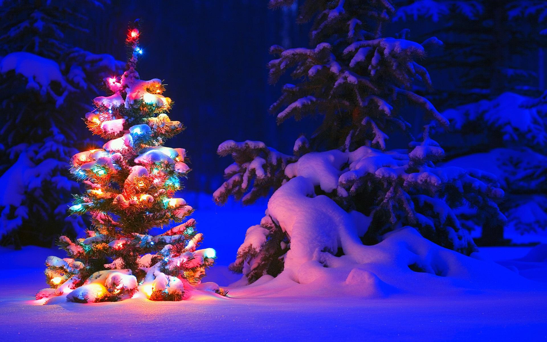 Schnee und Lichter auf Baum im Wald, Weihnachten 1920x1200 HD ...