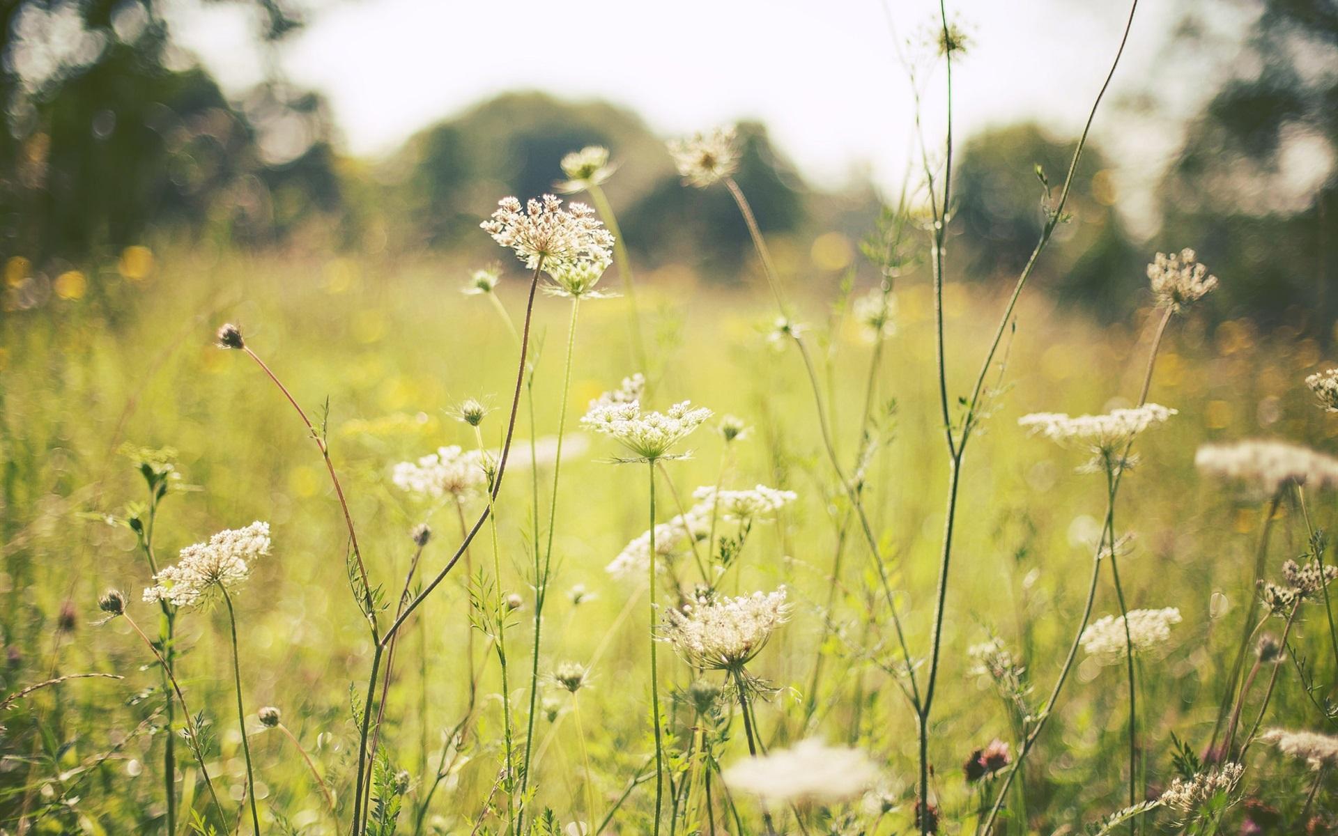 Обои цветы, grass. Цветы foto 15