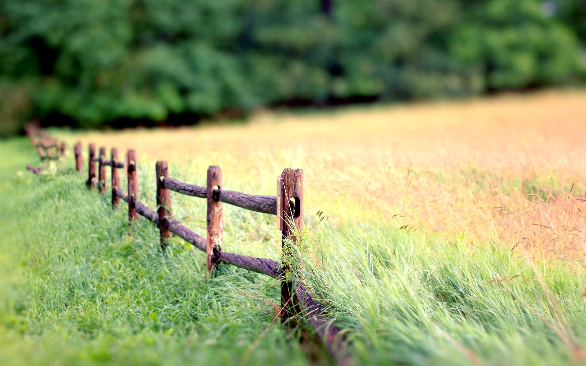 Wallpaper Nature Landscape, Fence, Grass, Blur Background
