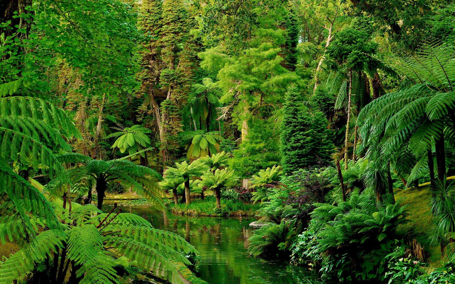 выборе картинка тропического леса с цветами леса факт подвергает историков