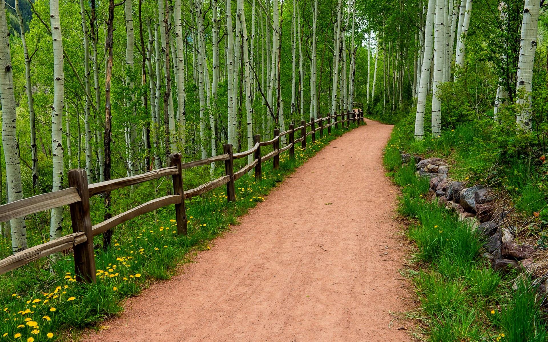 도로, 나무, 나무 울타리, 야생화 배경 화면  1920x1200 배경 화면 ...