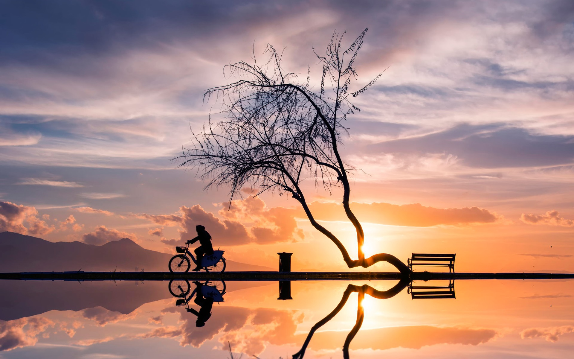 cbef8d2f0a Fondos de pantalla Puesta de sol, árbol, mujer, bicicleta, silueta ...