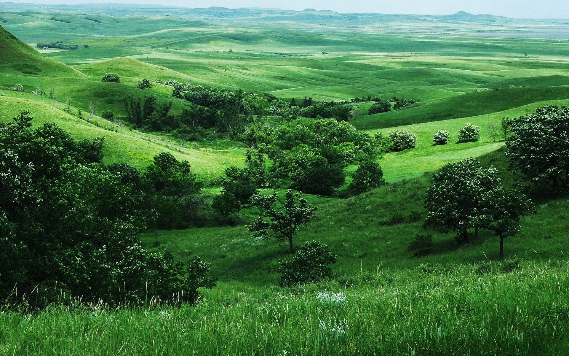 Wallpaper Green Nature Grass Trees Slope 1920x1200 Hd Picture Image
