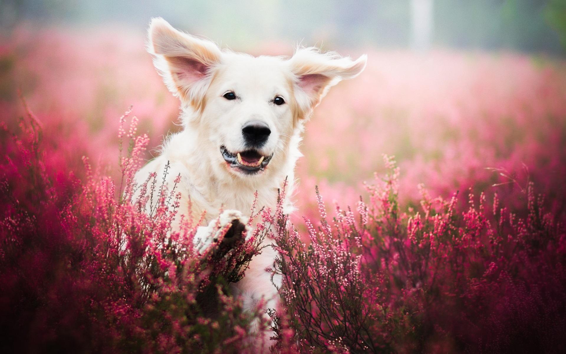 природа животные собака девочка жизнь nature animals dog girl life  № 3951104 без смс