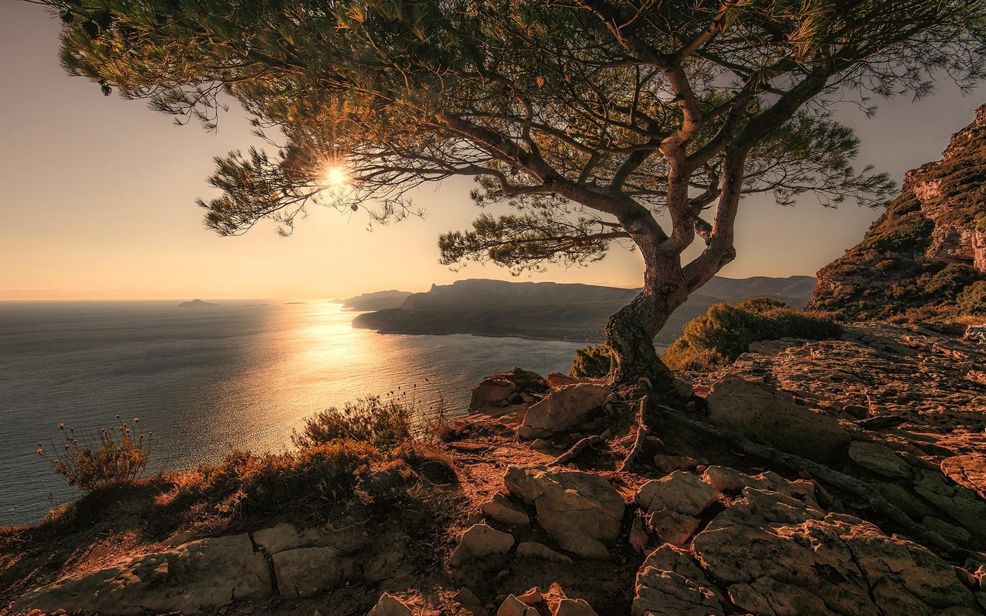 природа море деревья камни скалы  № 38490 загрузить
