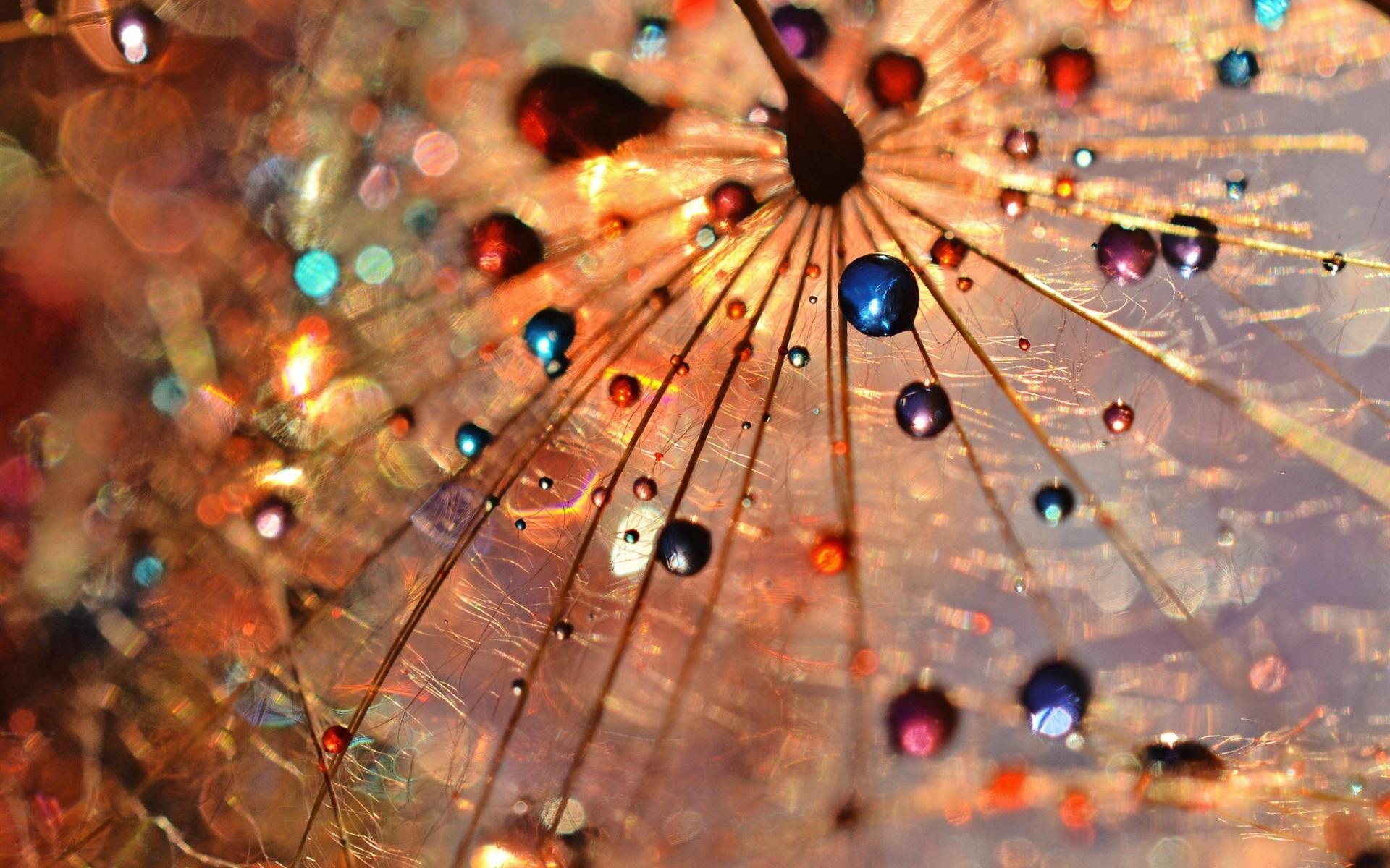 Wallpaper dandelion macro photography dew drops colorful - Dandelion hd wallpapers 1080p ...