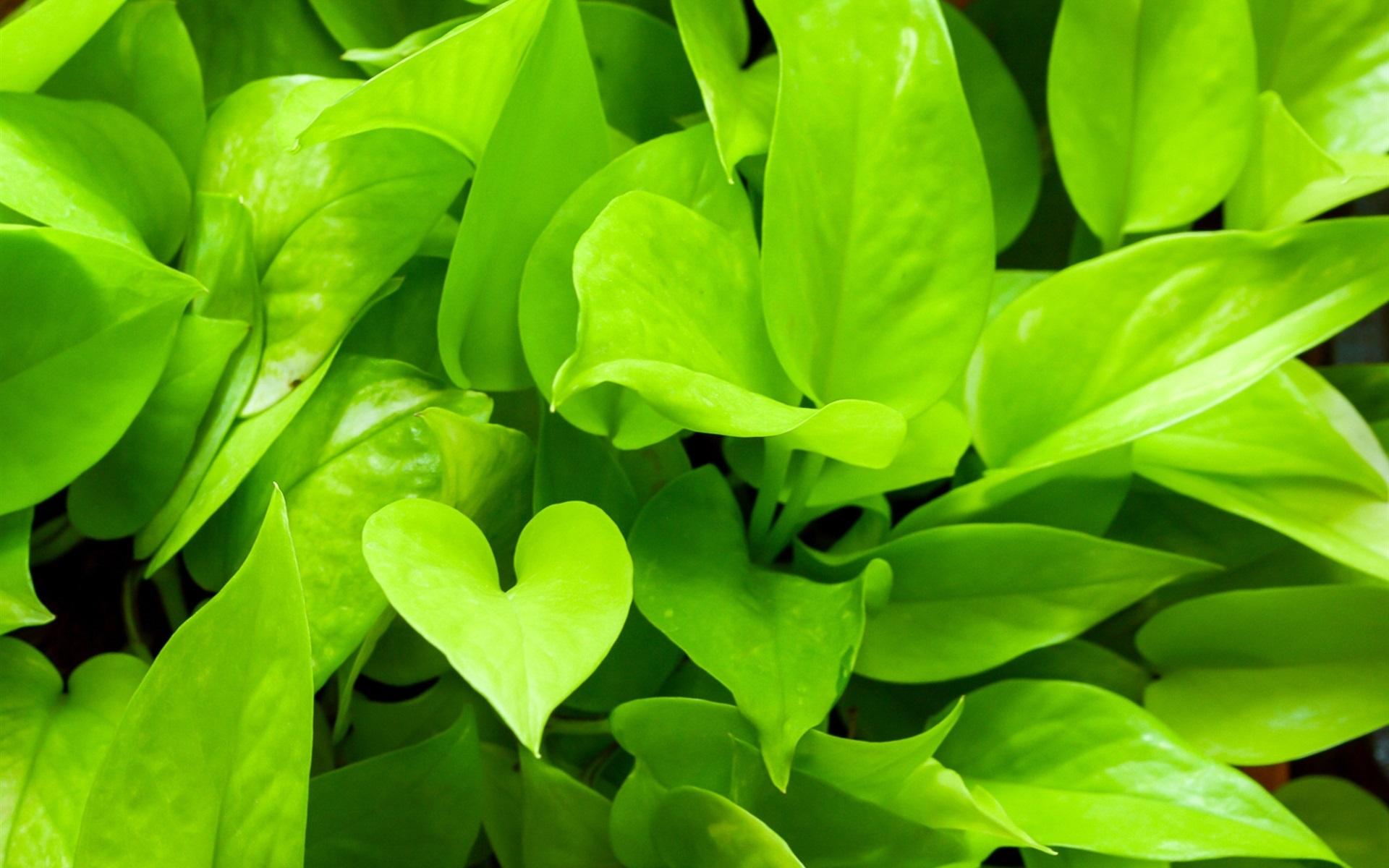 Faszinierend Grüne Pflanzen Ideen Von Dieses Farbige Logo Patternen