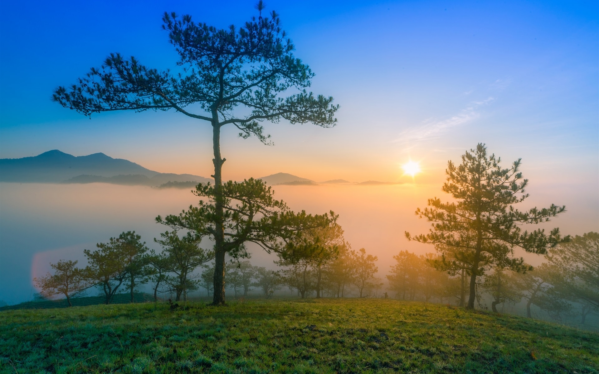 wallpaper dawn nature scenery, morning, mountains, pine trees, fog