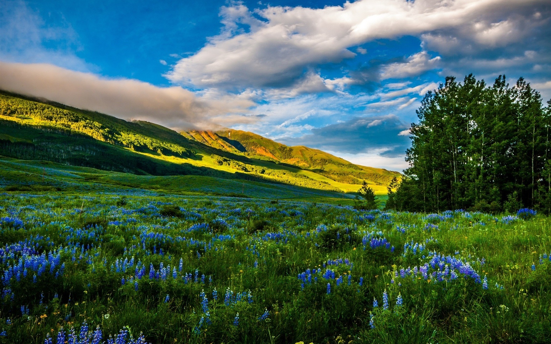 смотреть картинки с пейзажем и цветами самом