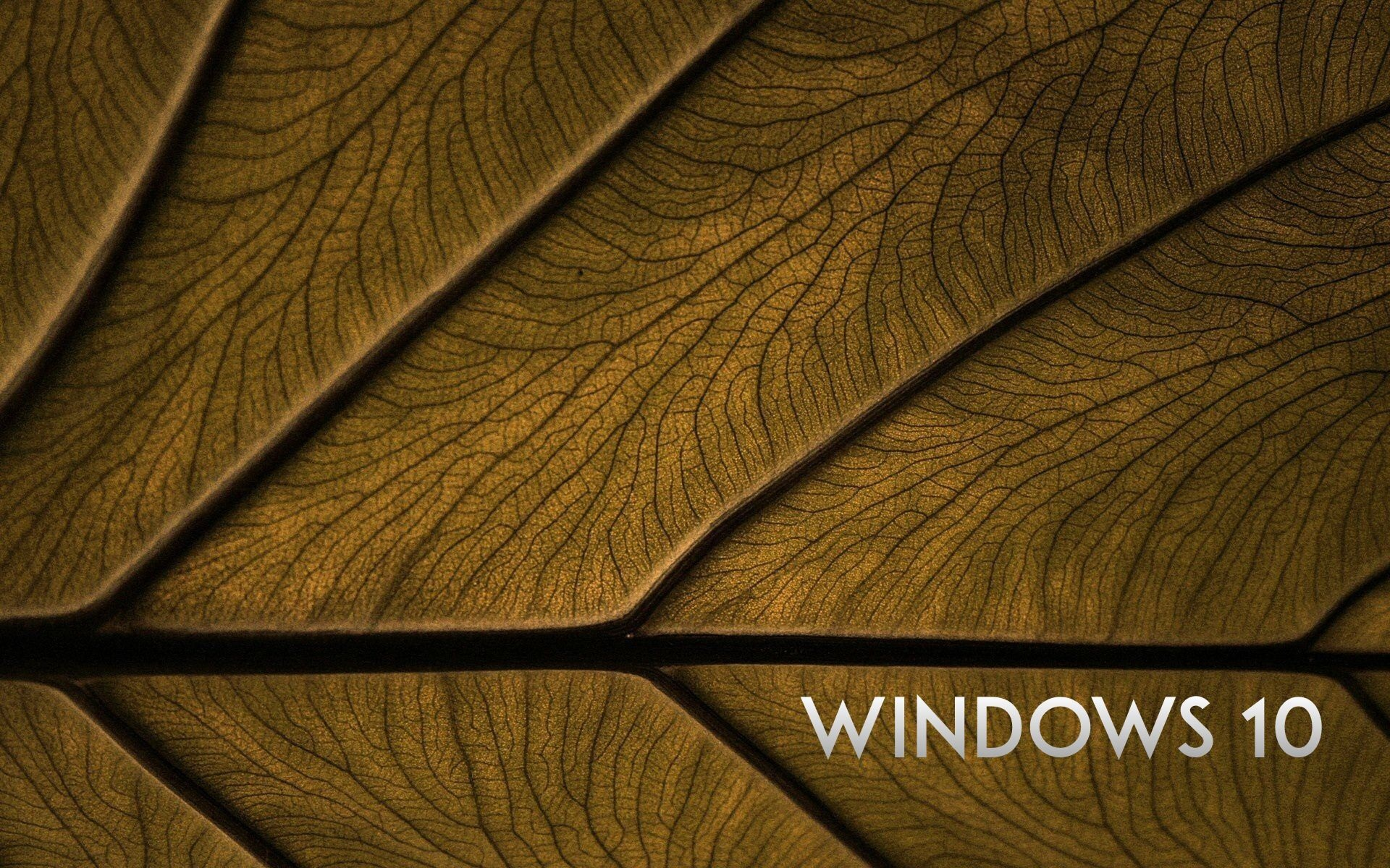 wallpaper windows 10 system leaf background 1920x1200 hd picture image