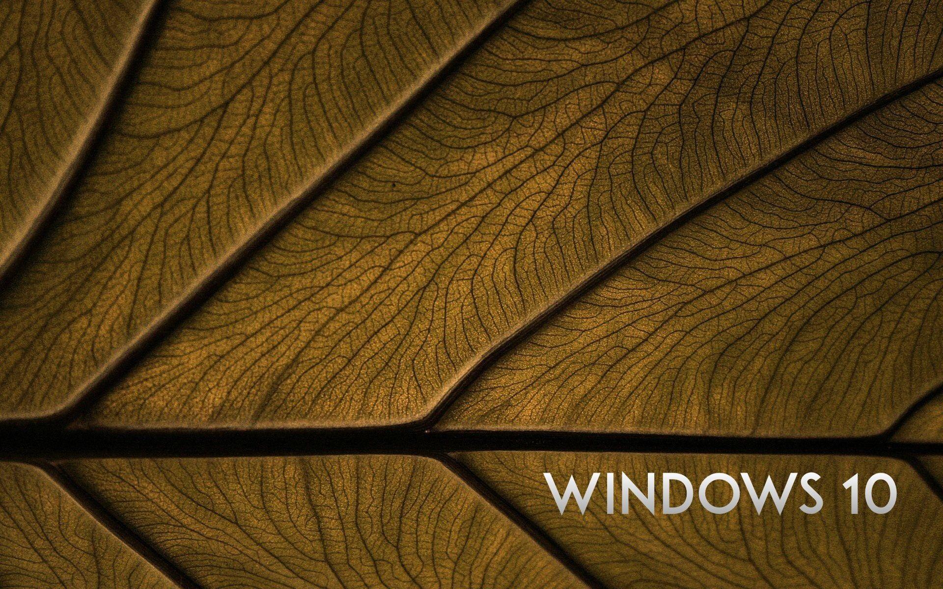 10 system leaf background wallpaper 1920x1200 description windows 10