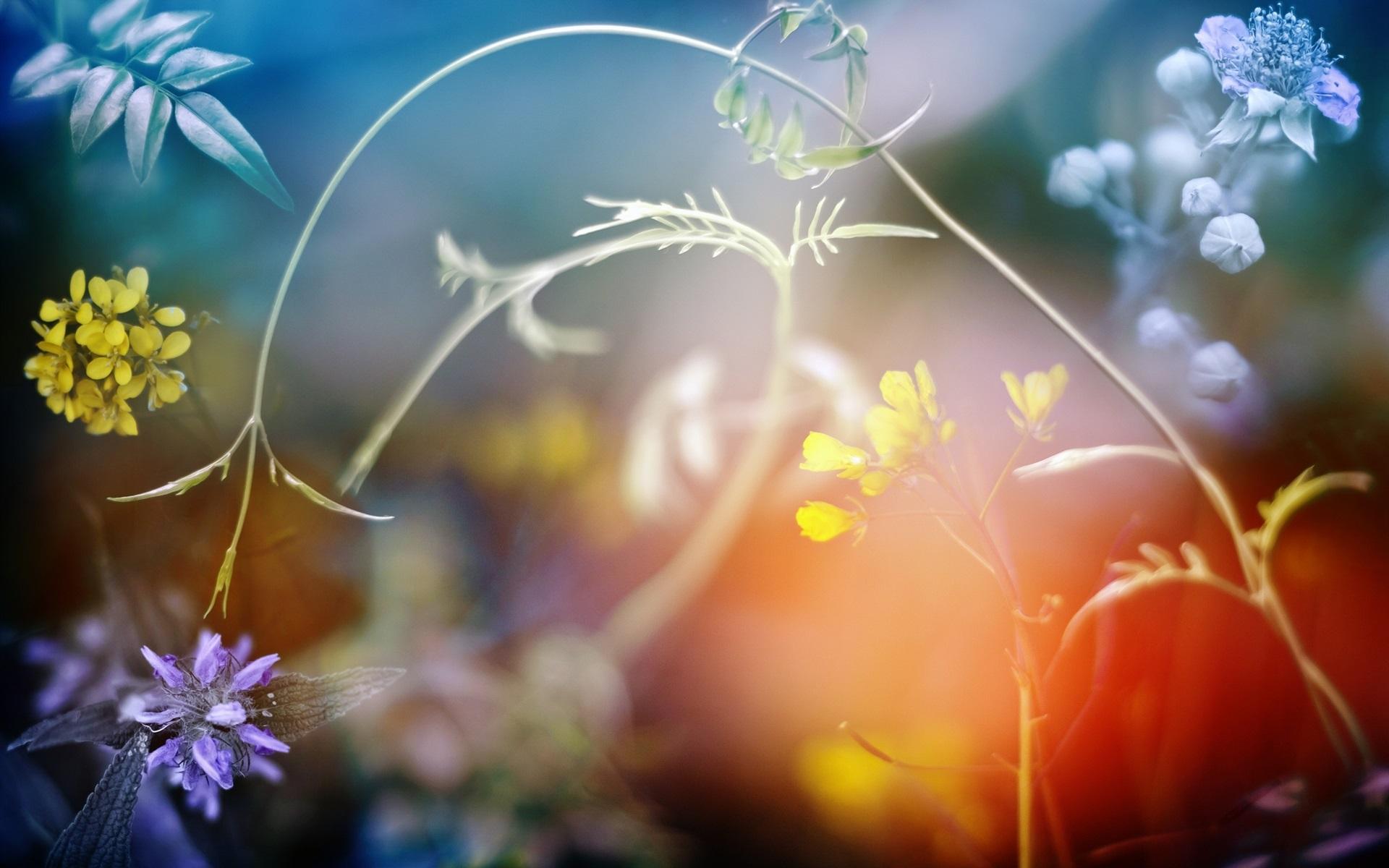 ボケ (植物)の画像 p1_29