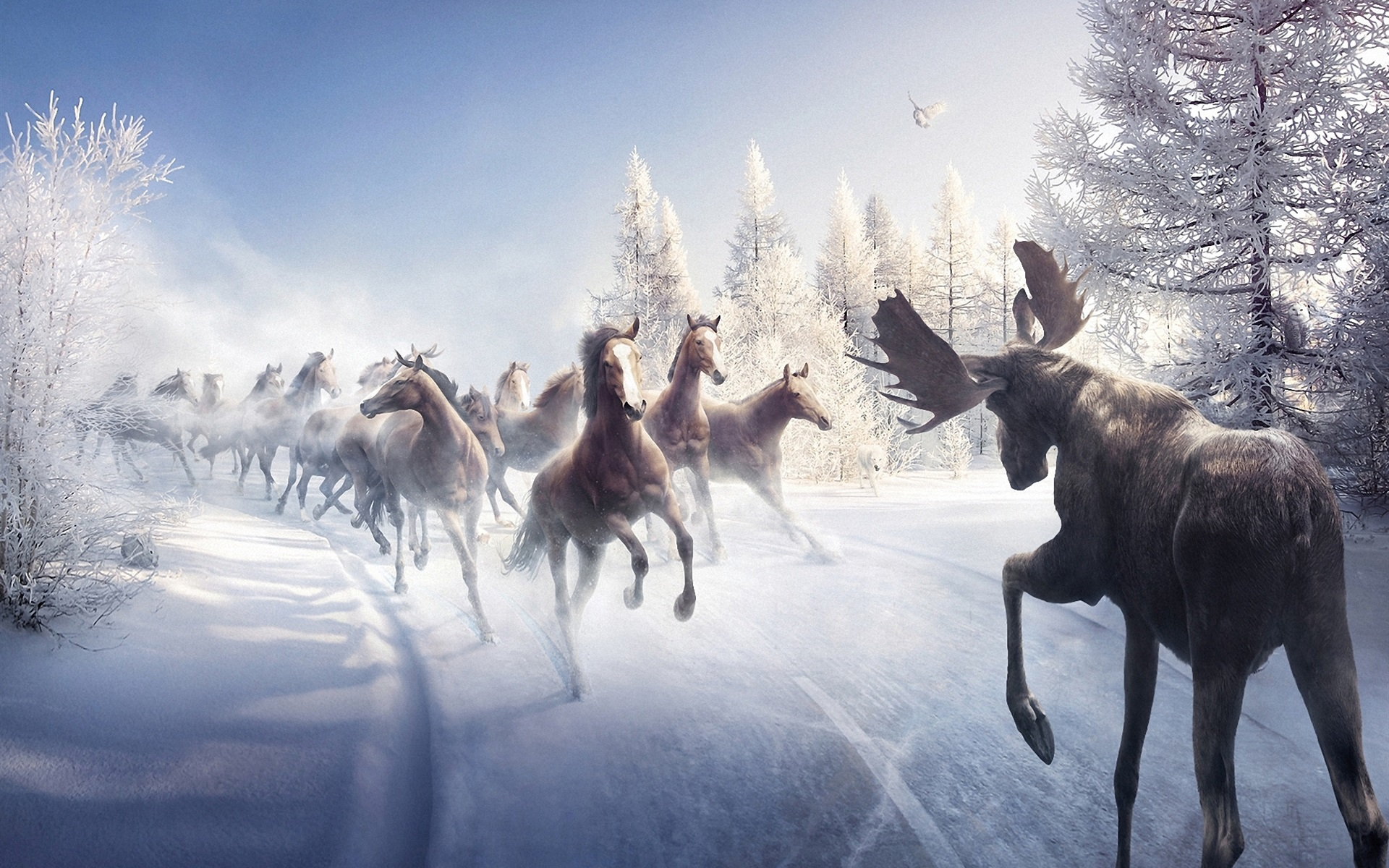 Wallpaper Horses In Winter Running 1920x1200 Hd Picture Image
