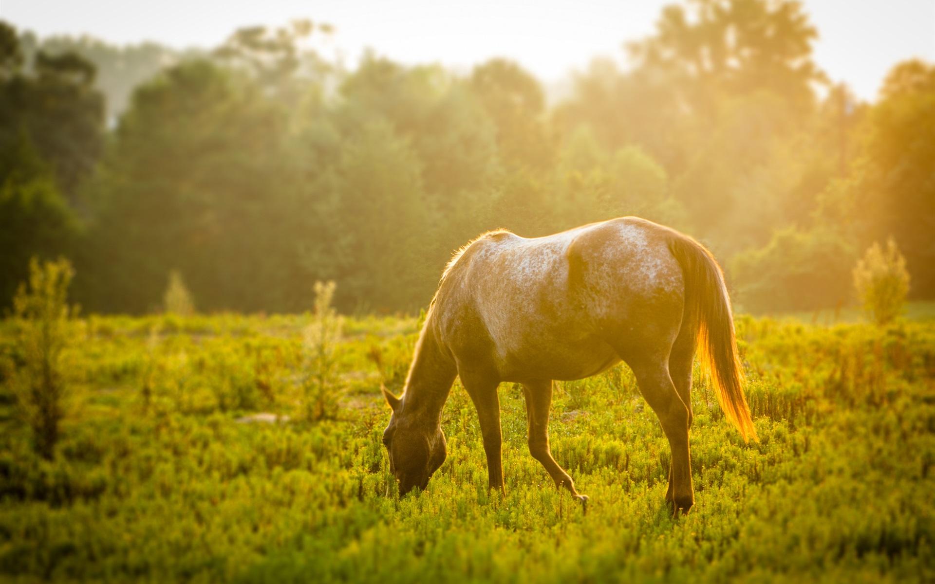 лошадь, трава, закат  № 2739 бесплатно
