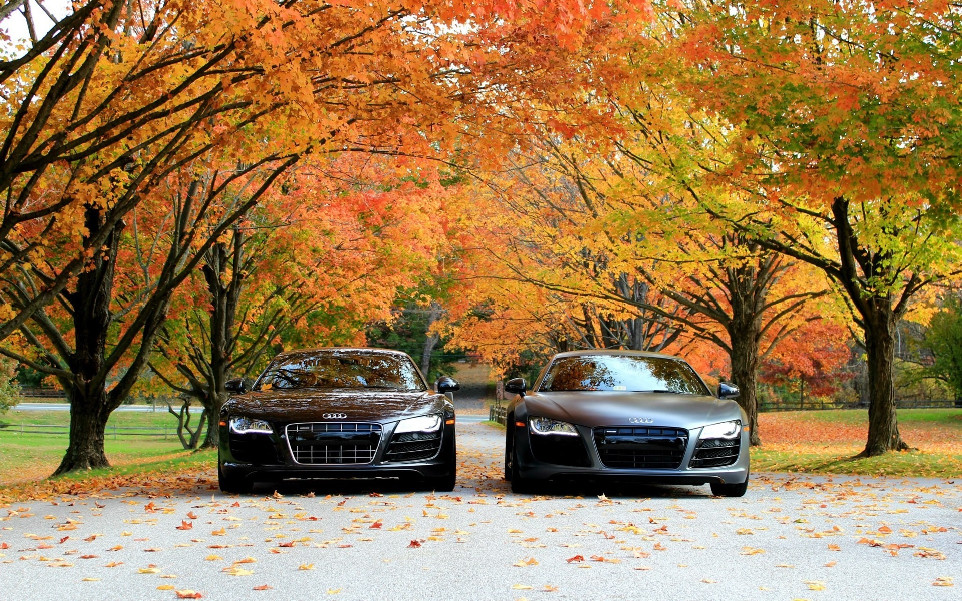 Wallpaper Audi R8 V10 Cars Front View Autumn Trees 1920x1200 Hd Picture Image