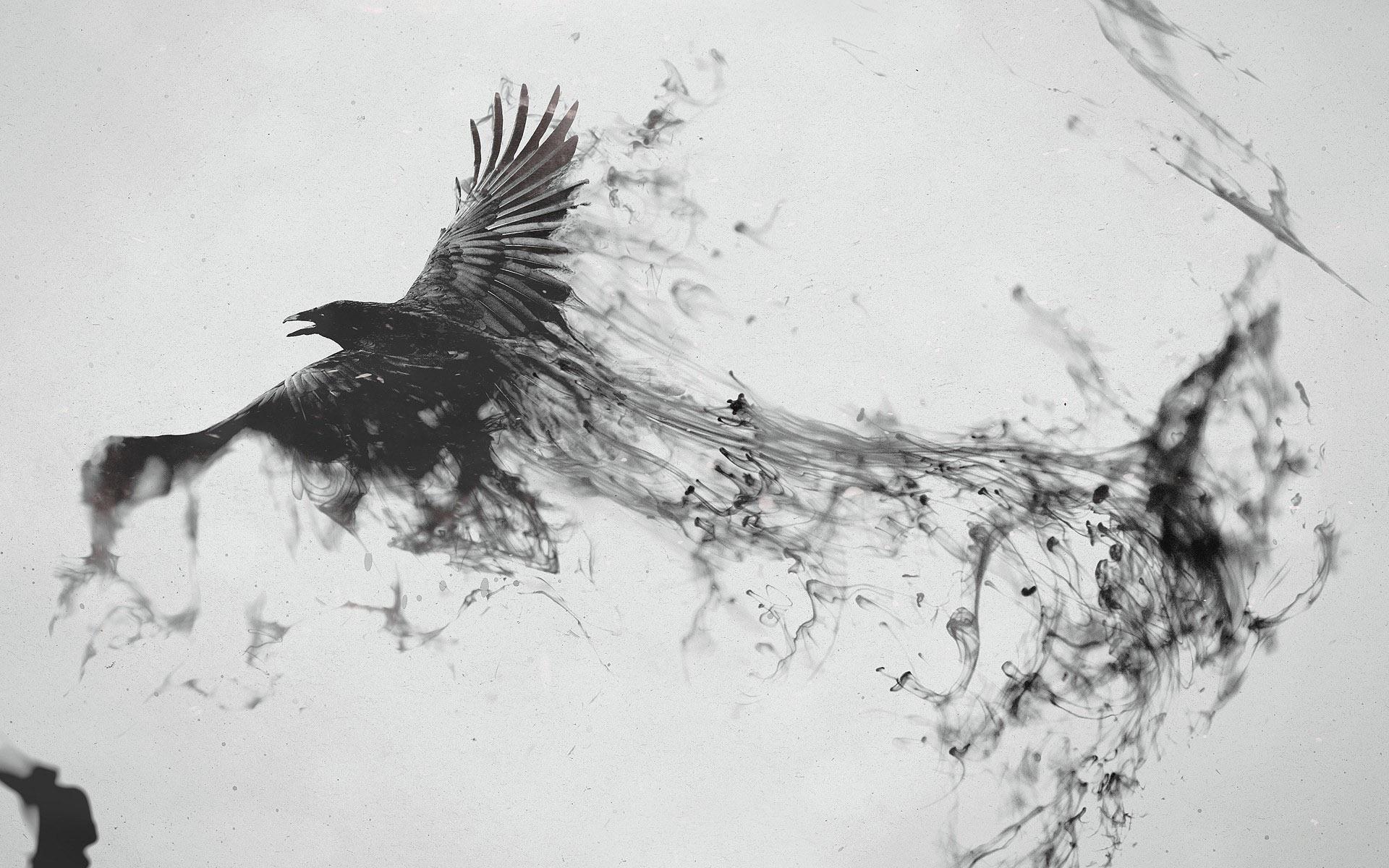Wallpaper Black Raven Flying Bird Wings Smoke Creative Picture