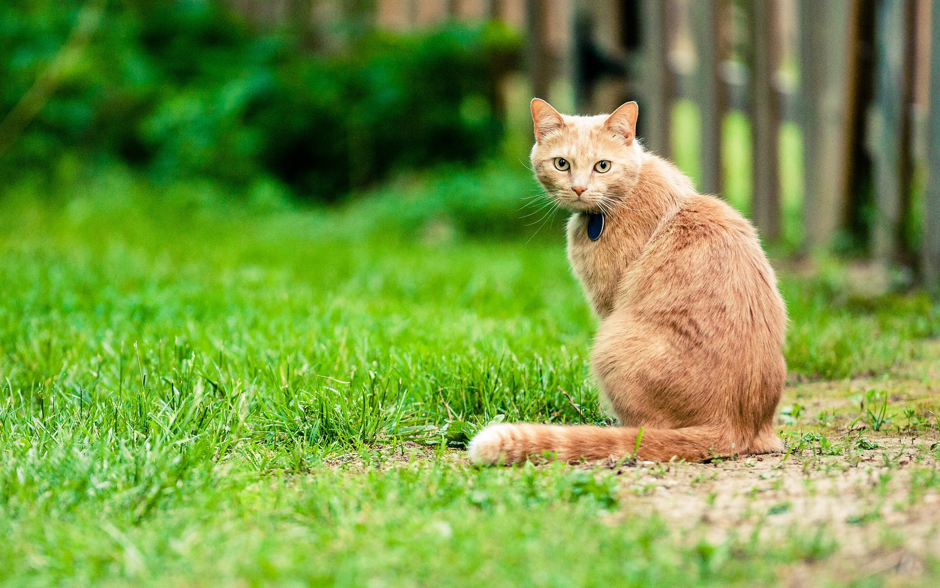 есть все, картинки высокого разрешения котик на плече сидит хирурги уверены