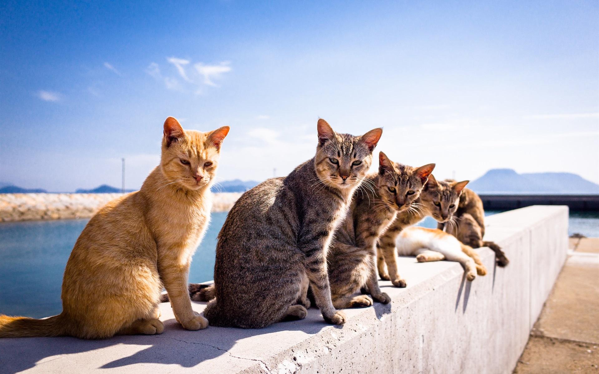 壁紙 太陽の下でかわいい猫 1920x1200 Hd 無料のデスクトップの背景 画像