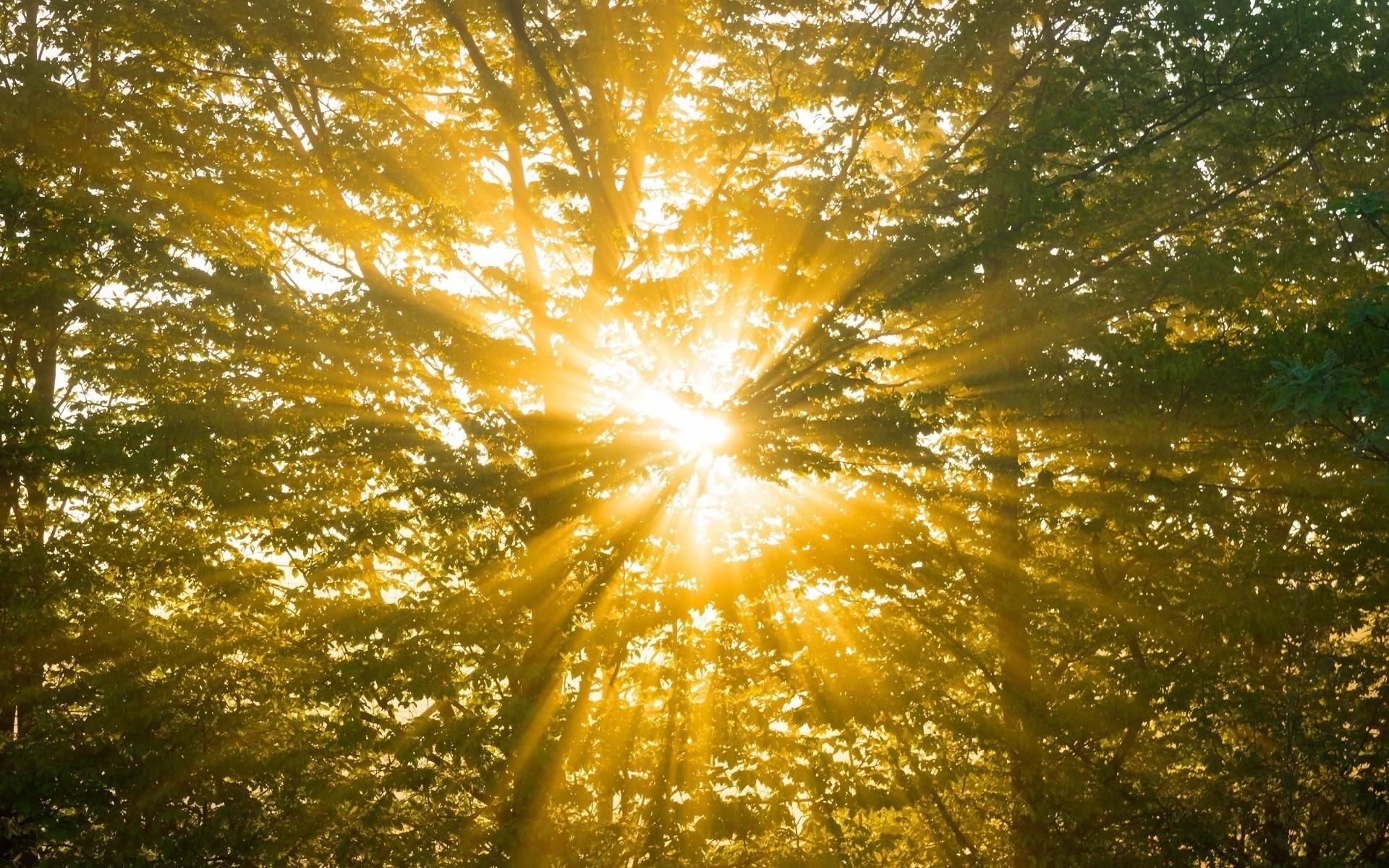 анимационные картинки солнышко сияет природа или иные