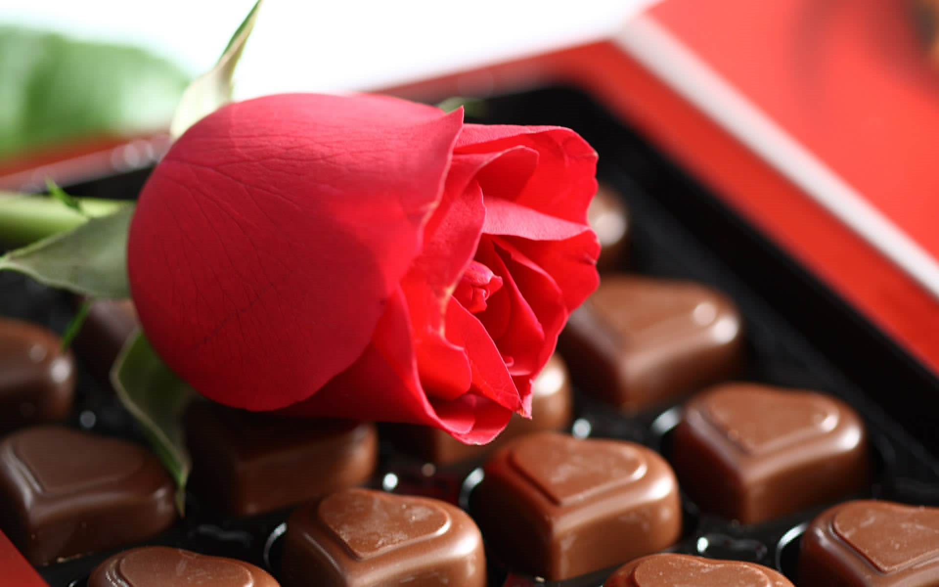 Wallpaper Red Rose And Chocolate Candy 1920x1200 HD Picture Image