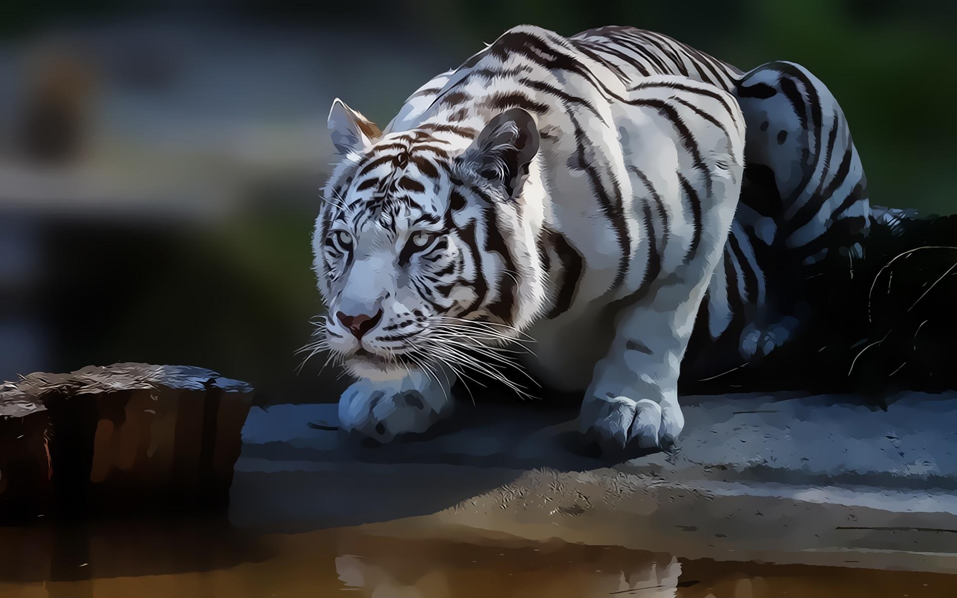 Fonds d'écran Tigre blanc, peinture d'art 1920x1200 HD image