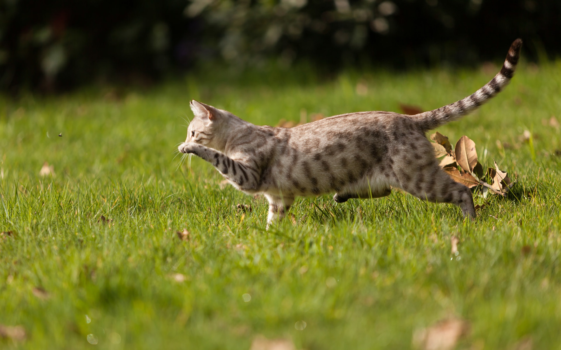 Картинка кота который бежит