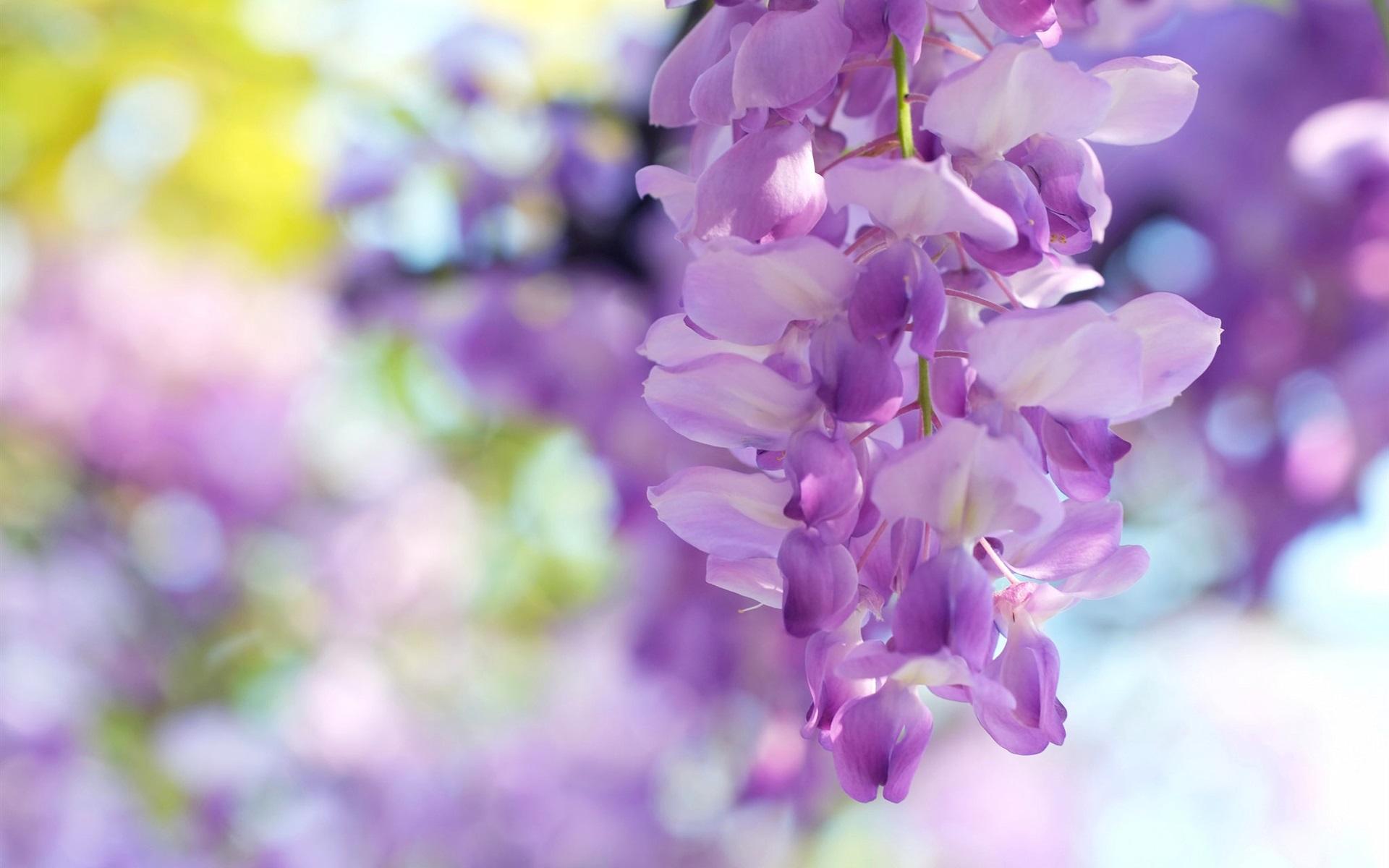 壁紙 藤の花 薄紫 1920x1200 Hd 無料のデスクトップの背景 画像