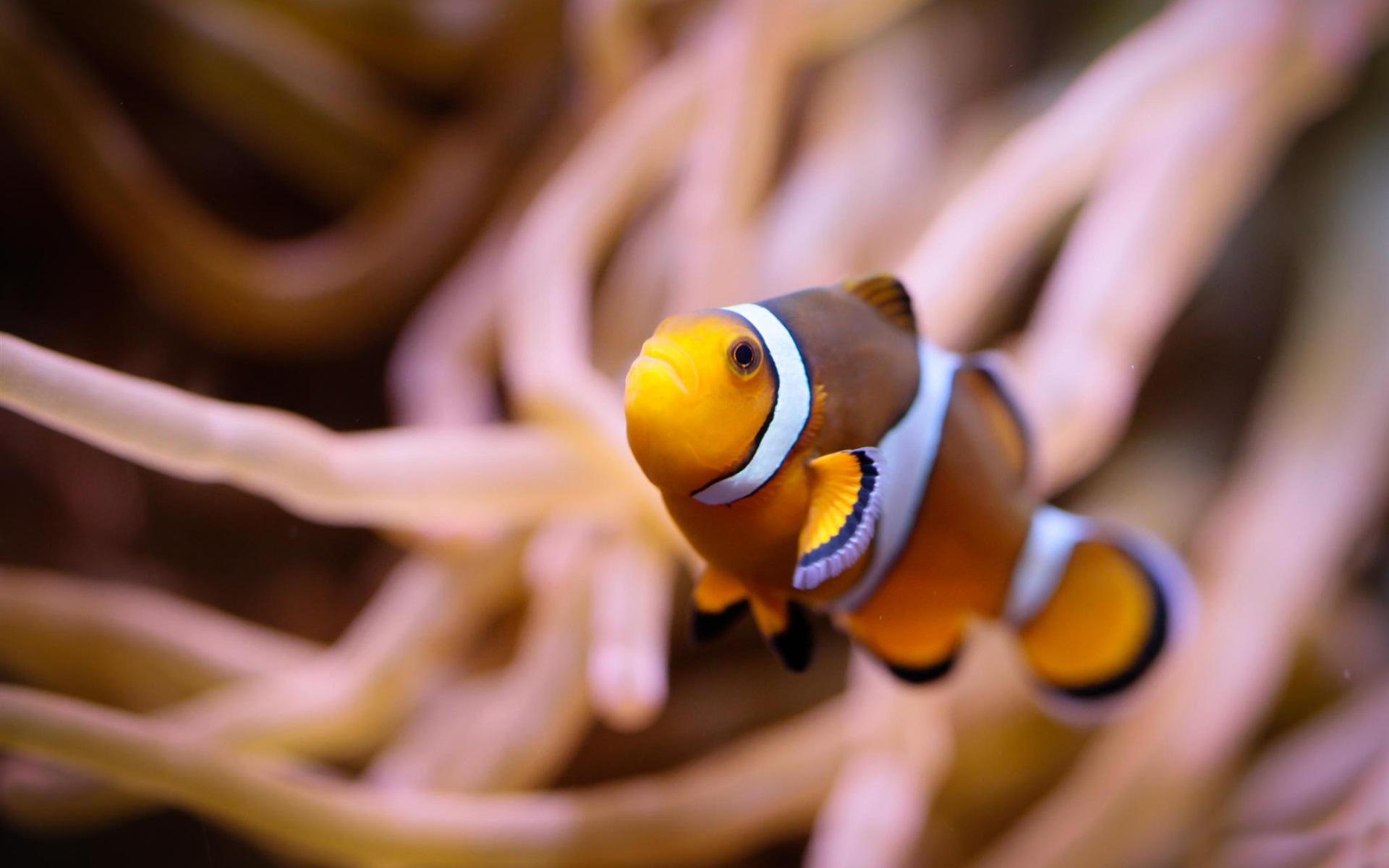 Желтая Рыба макро  № 1088174 без смс