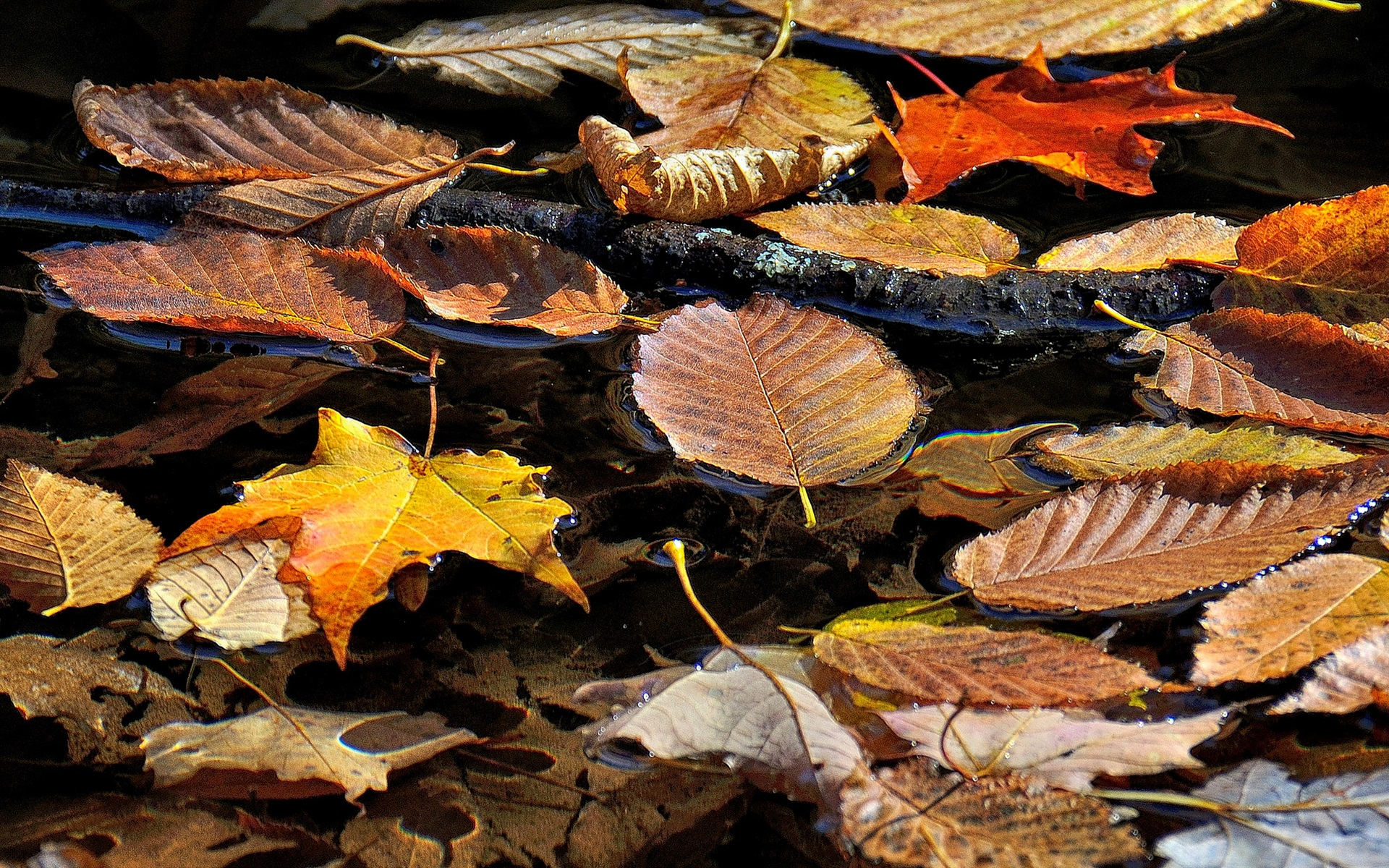 Wallpaper Dry leaves float on water, autumn 1920x1200 HD