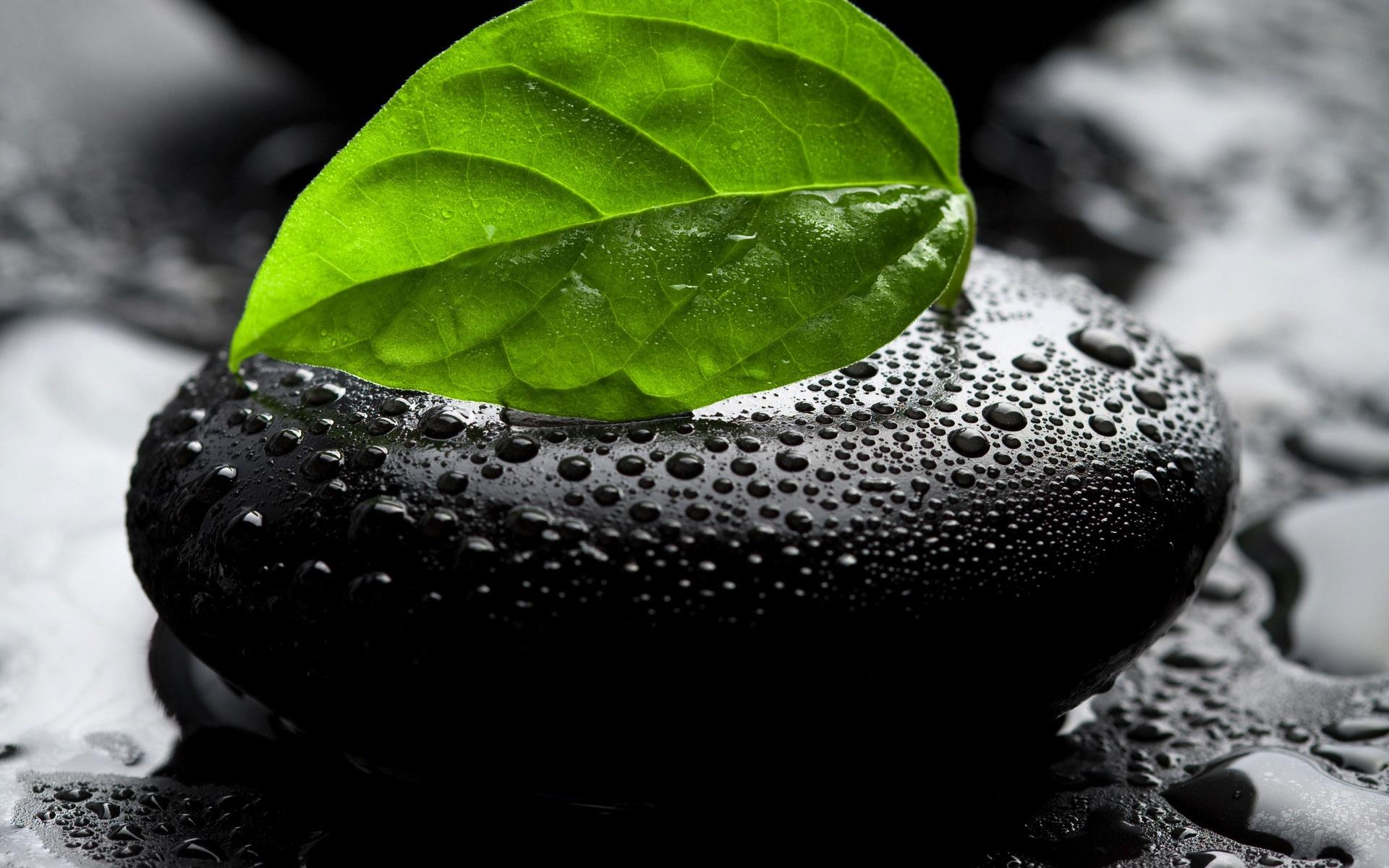 спа листья камни  № 1504761 загрузить