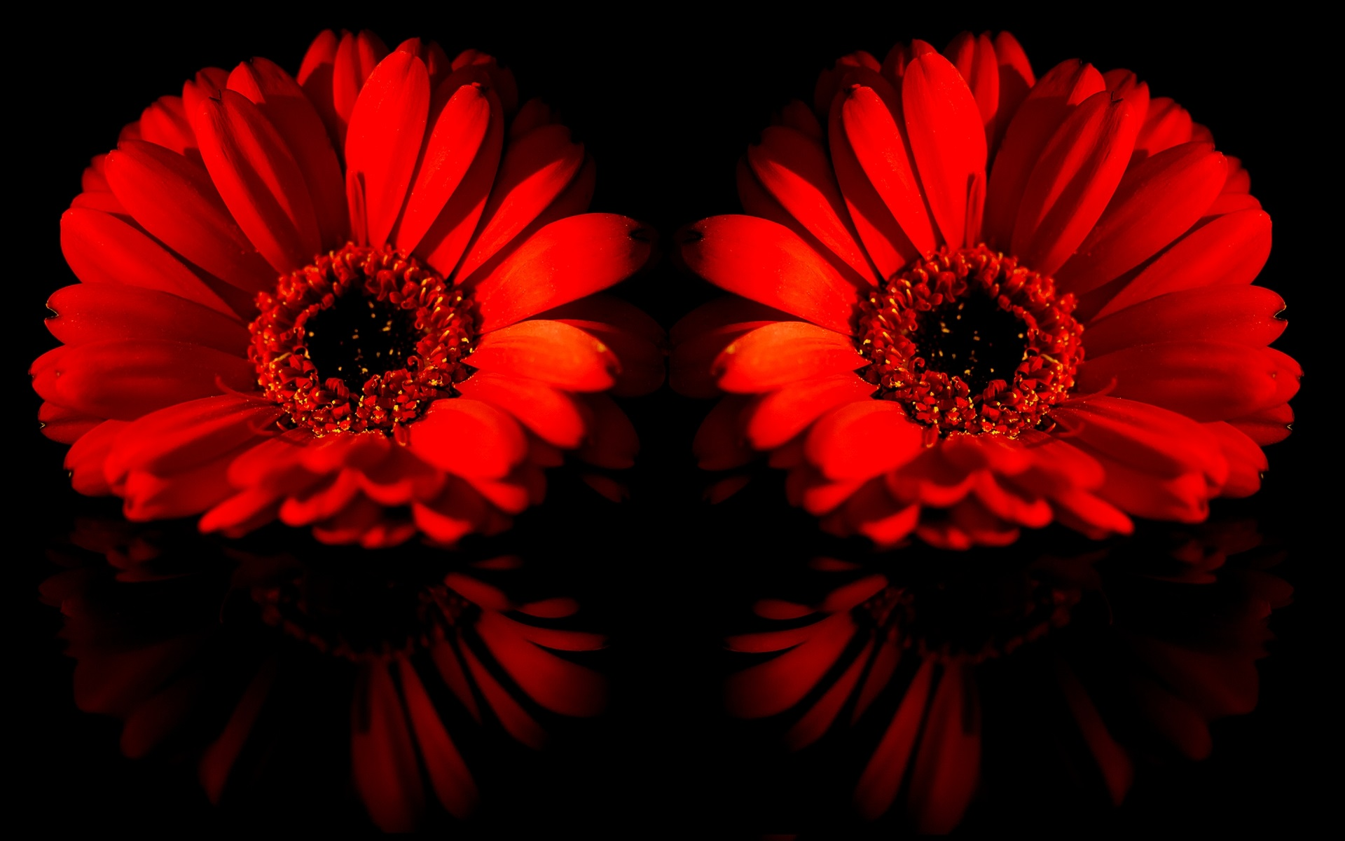 Wallpaper two red daisy flowers 1920x1200 hd picture image download this wallpaper izmirmasajfo