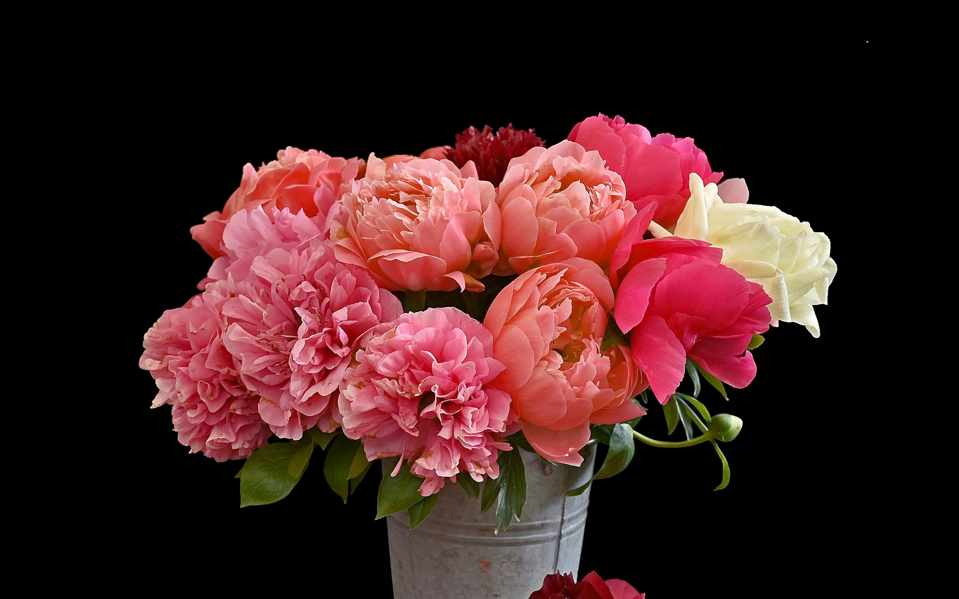 wallpaper bouquet flowers, pink peonies, bucket, black background