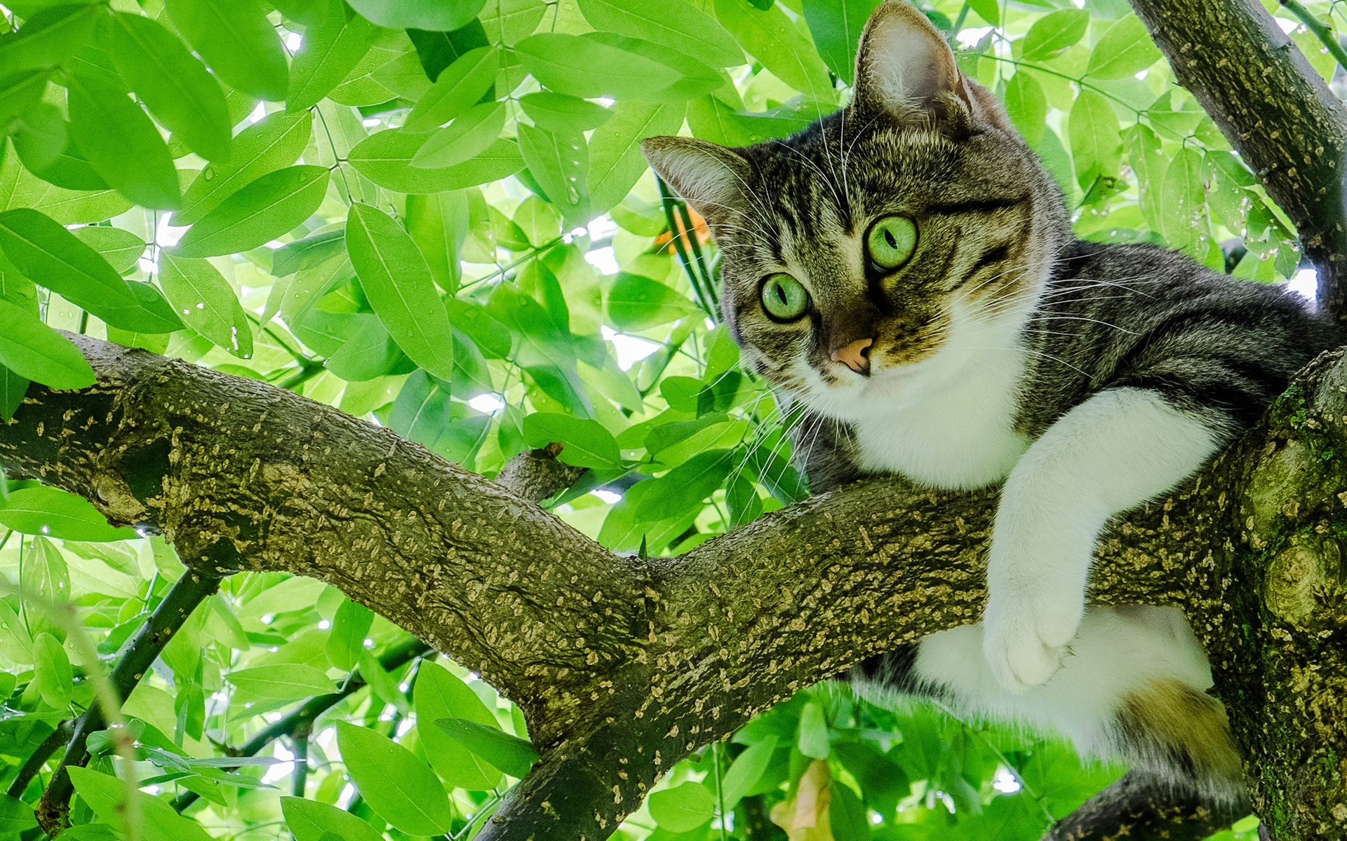словам фото кошек на дереве альбомы успехом