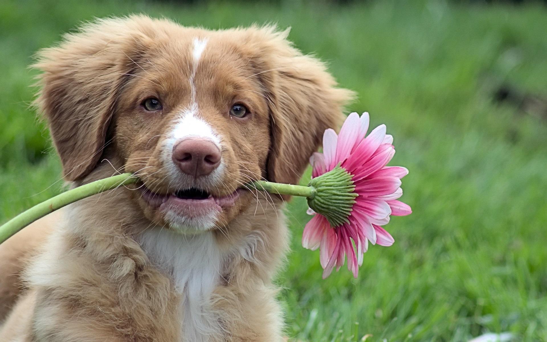 Картинки смешная животное с цветком