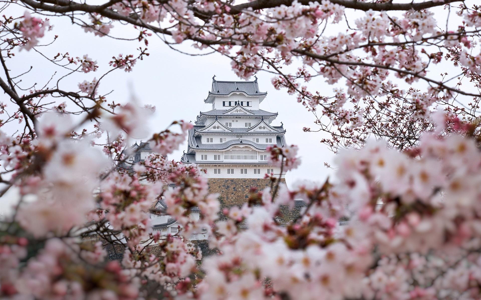 Замок Осака Япония сакура  № 3700754 бесплатно