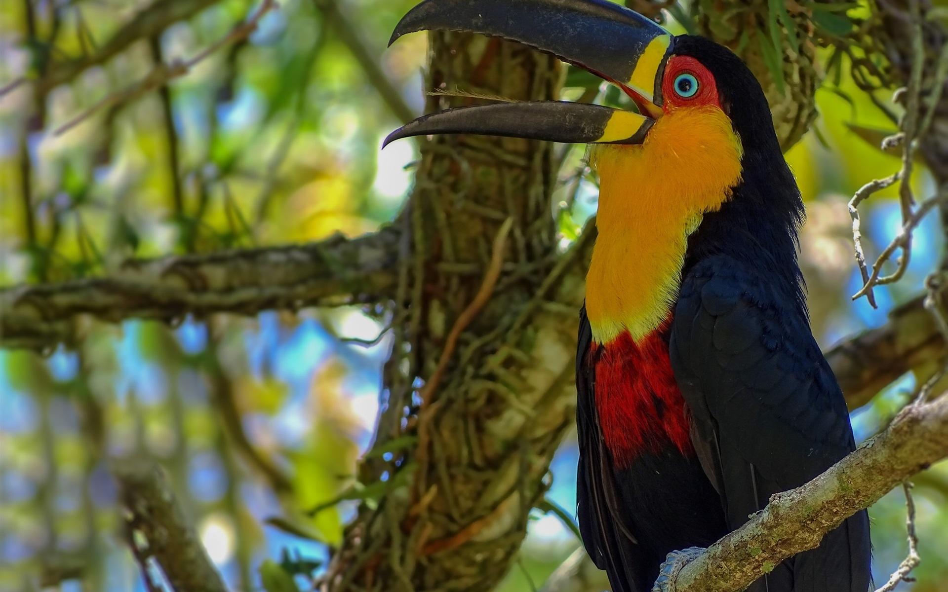 экзотические птицы картинки