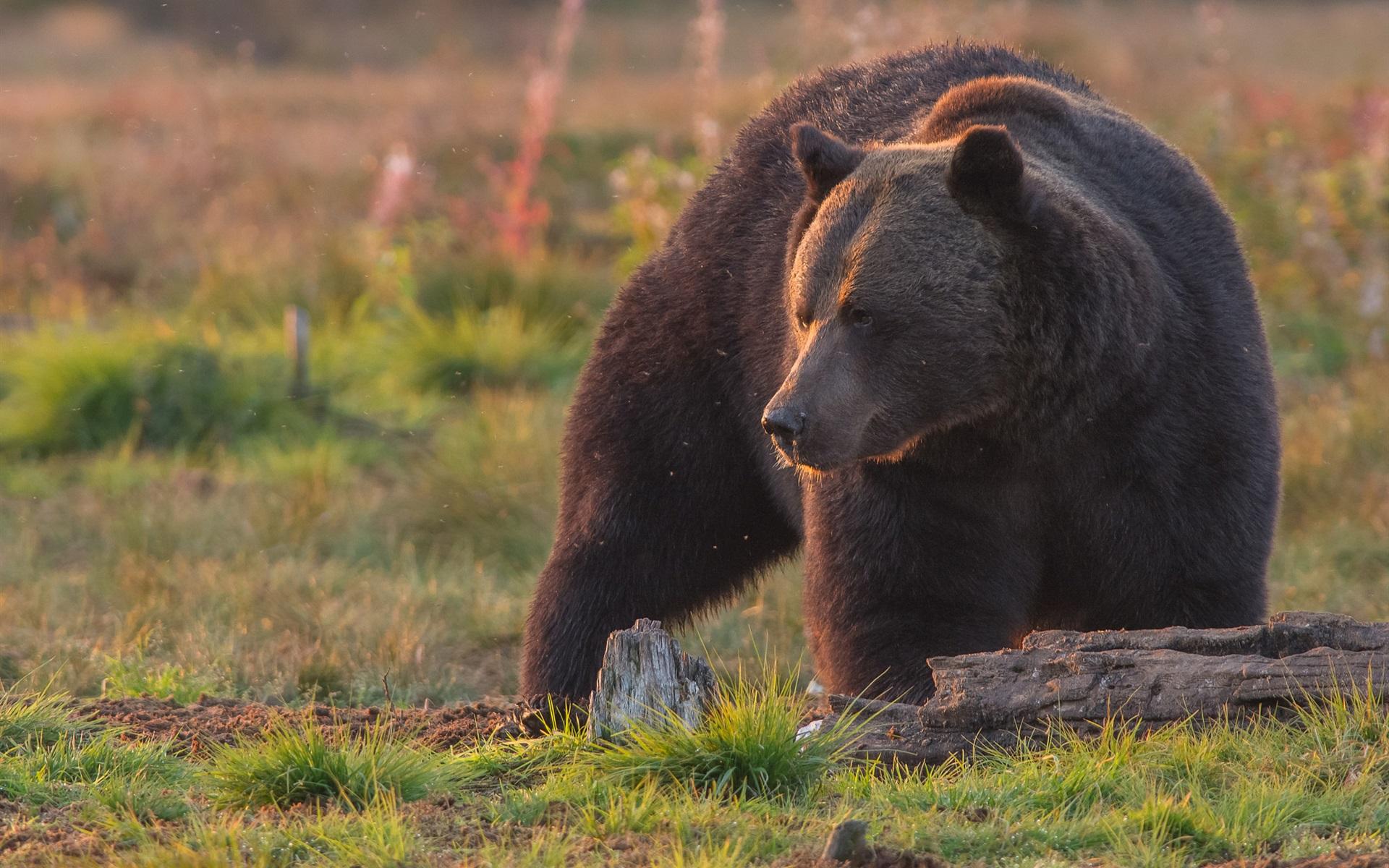 Картинки медведей на рабочий стол, рождеству открытки бывшему